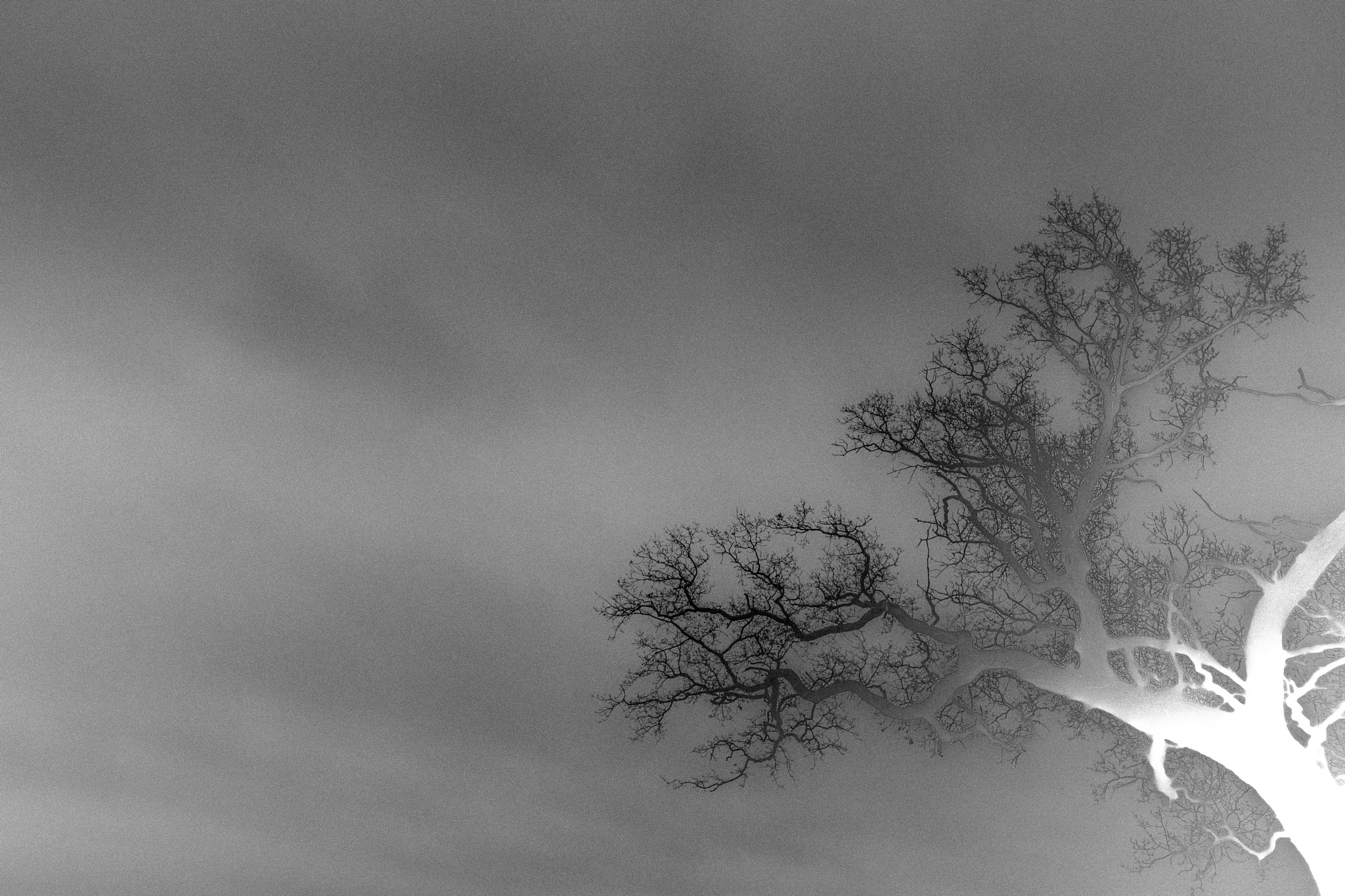 Negative space by Seonaid Teal Photography