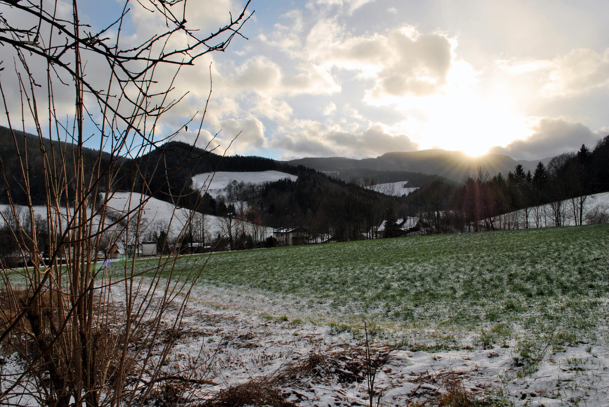 Sunny field in Rax region (Alps) by Nic Piégsa