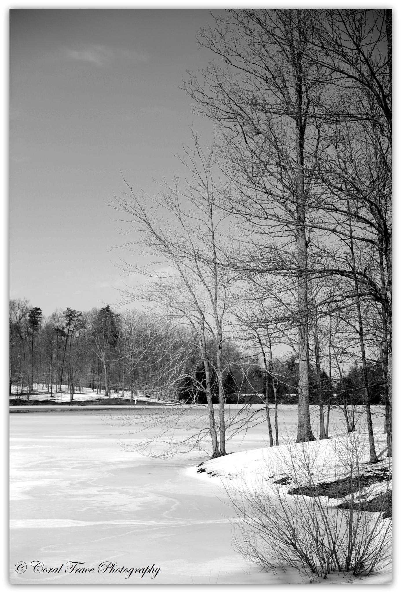Winter Beauty by Laurie