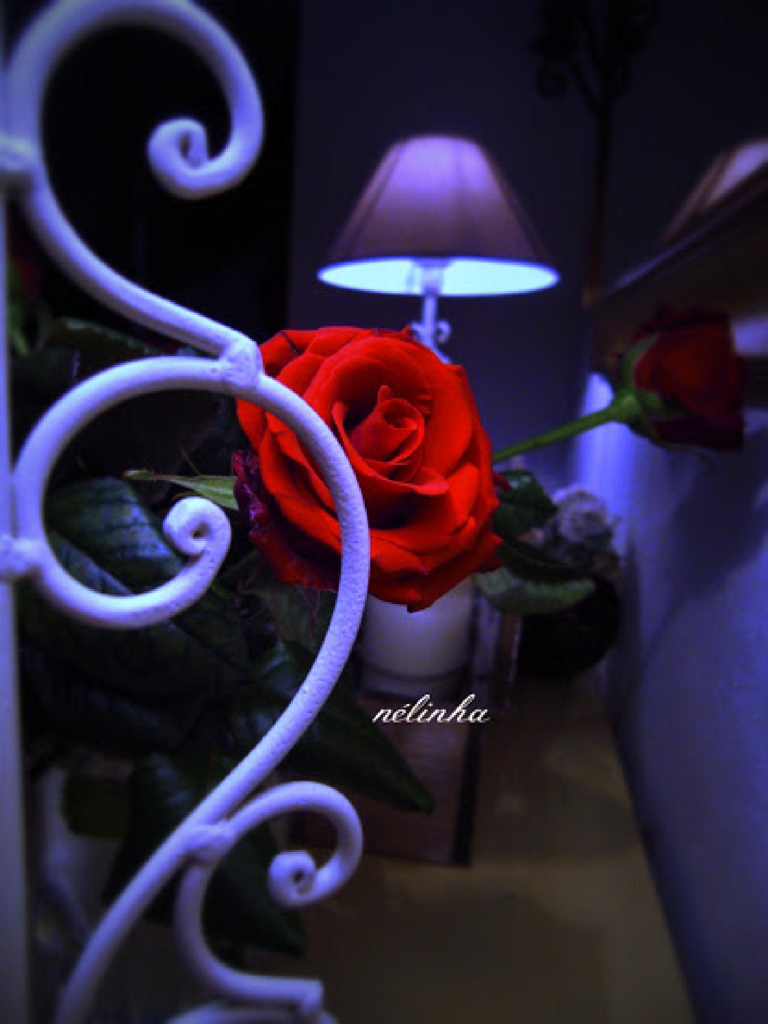 Roses..... by Nélinha