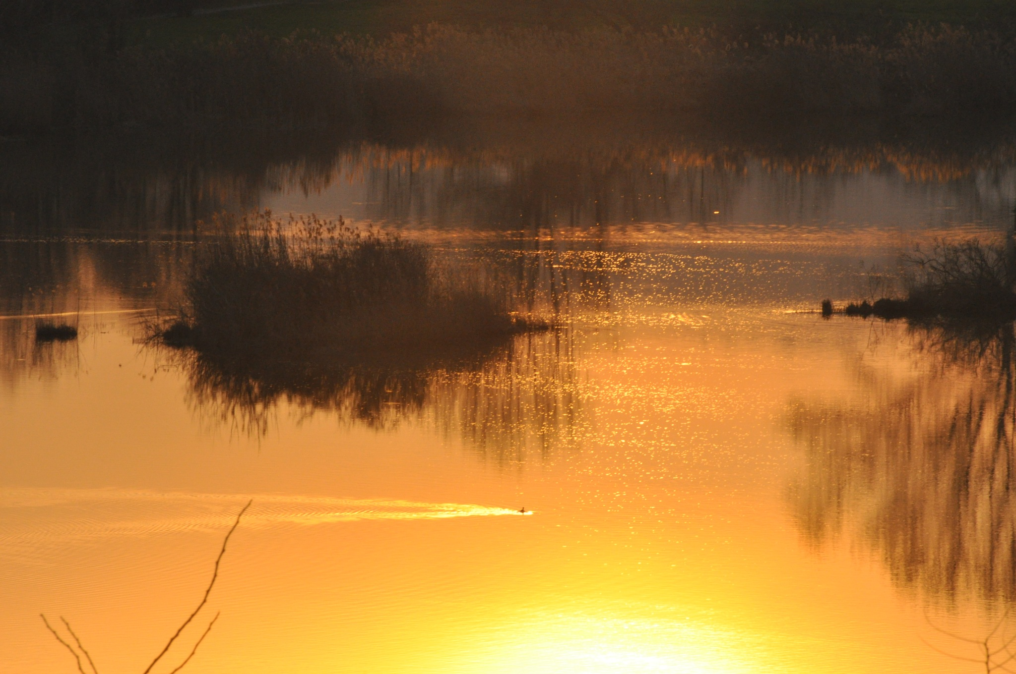 Torbiere del lago d'Iseo by filippo.true