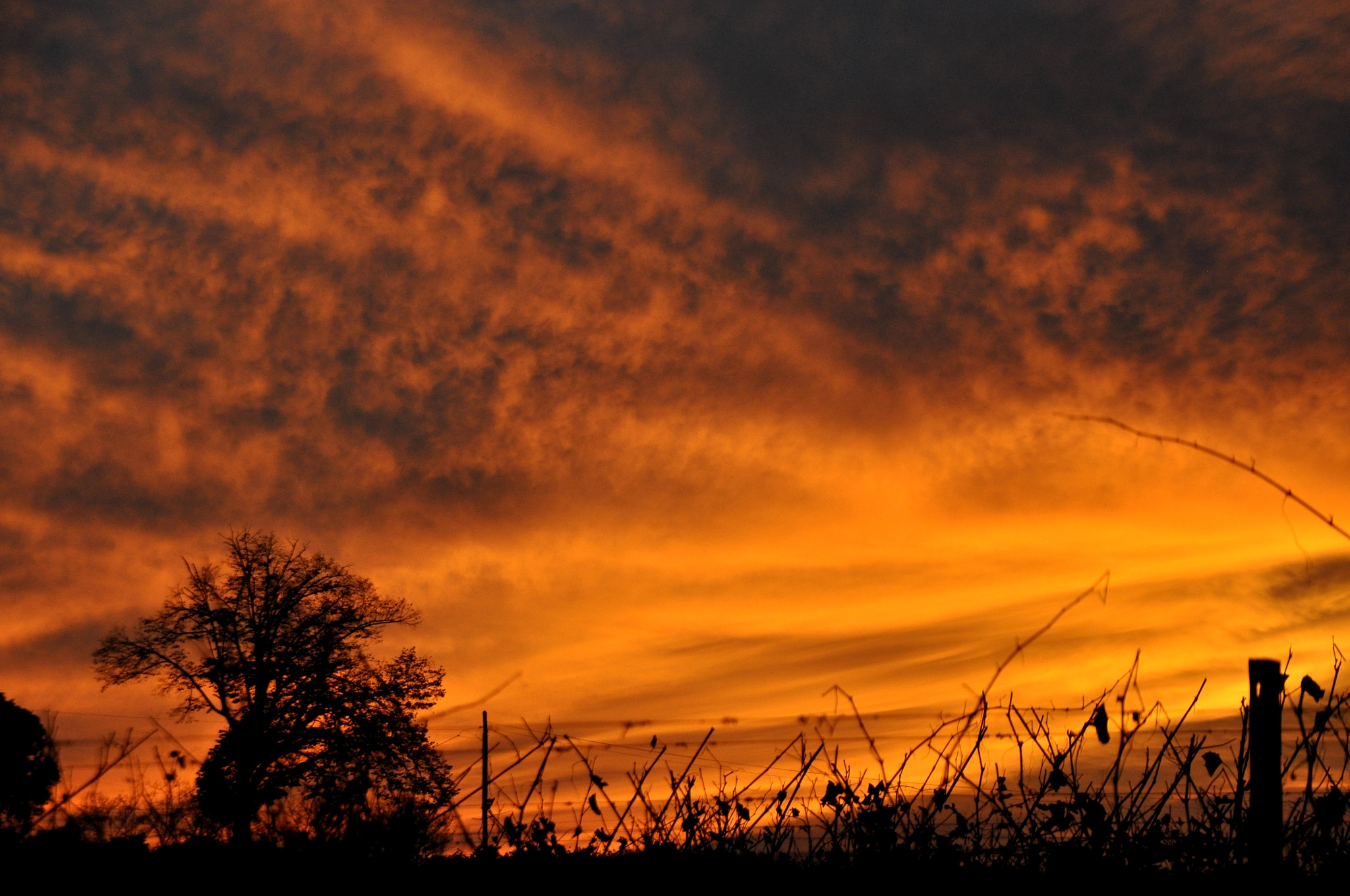SUNSET WITH VINEYARD by filippo.true