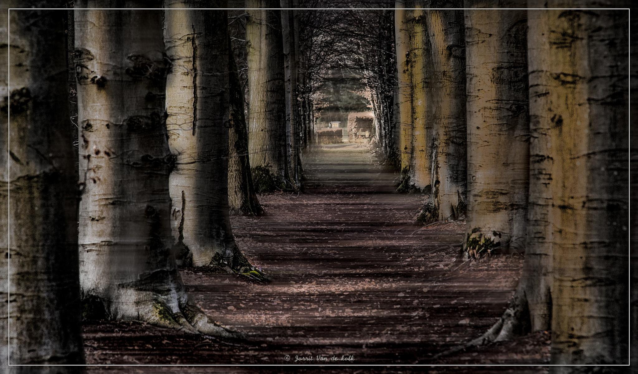 The way out of the forest.. by Jorrit van de kolk