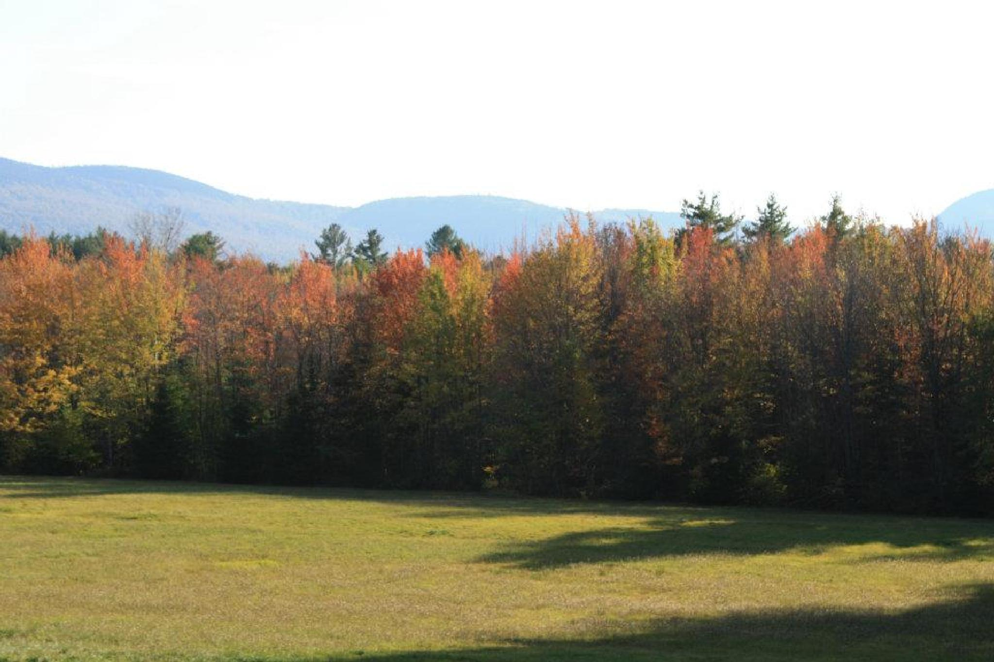 beautiful back yard by pauline