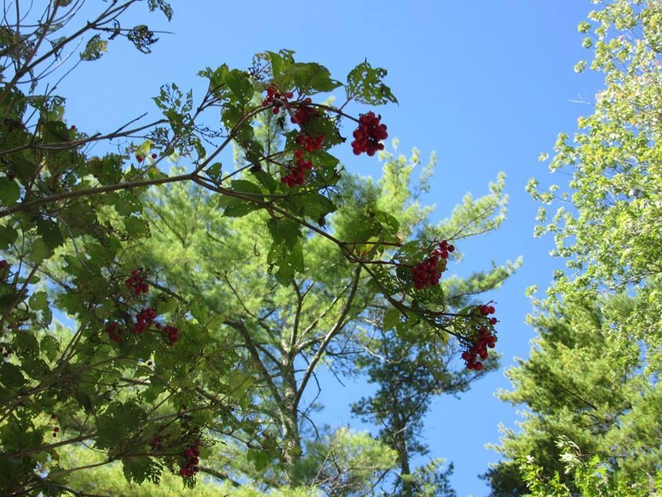 wild berry tree  by pauline