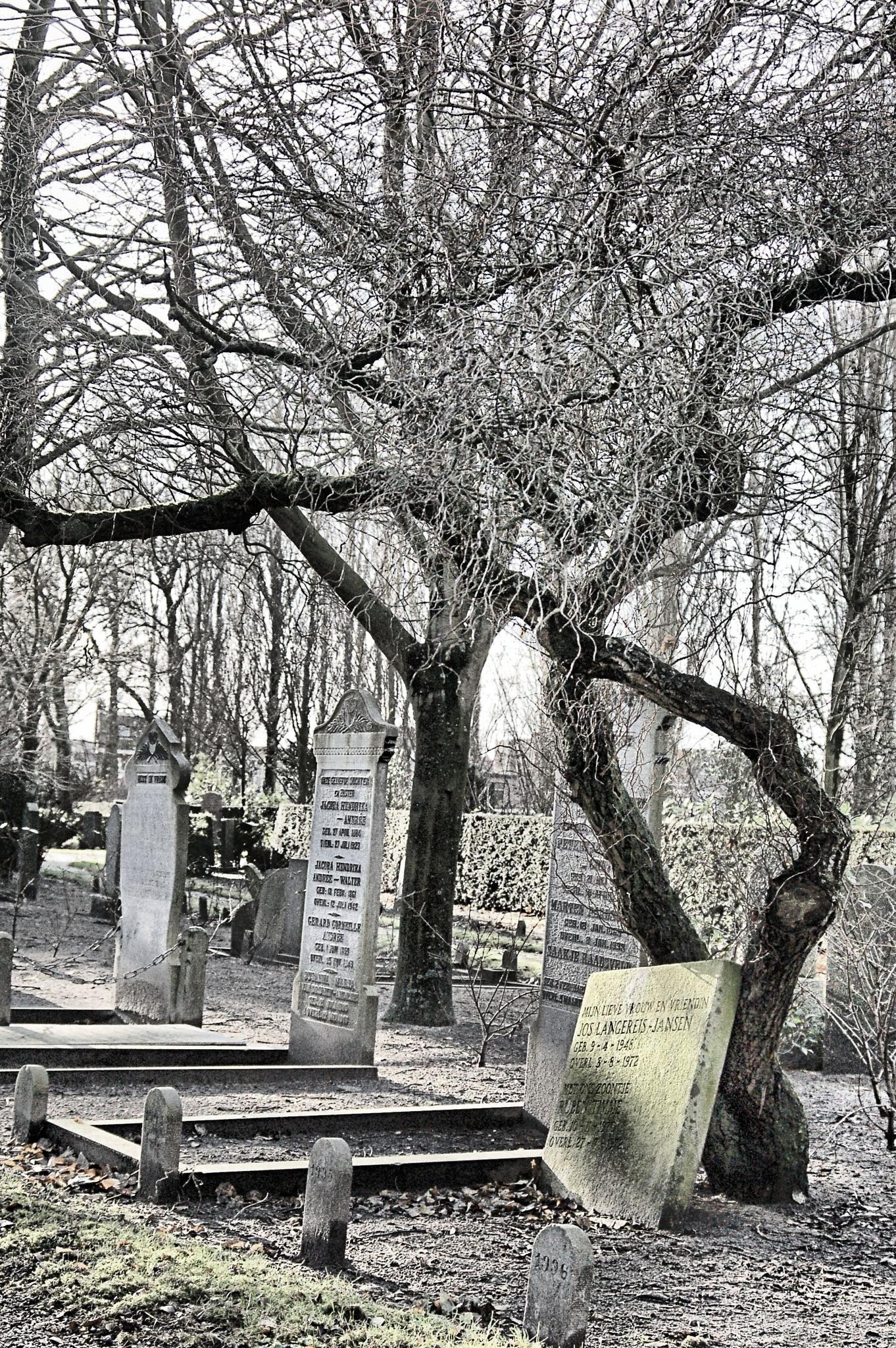 Cemetery by ron.krijnen