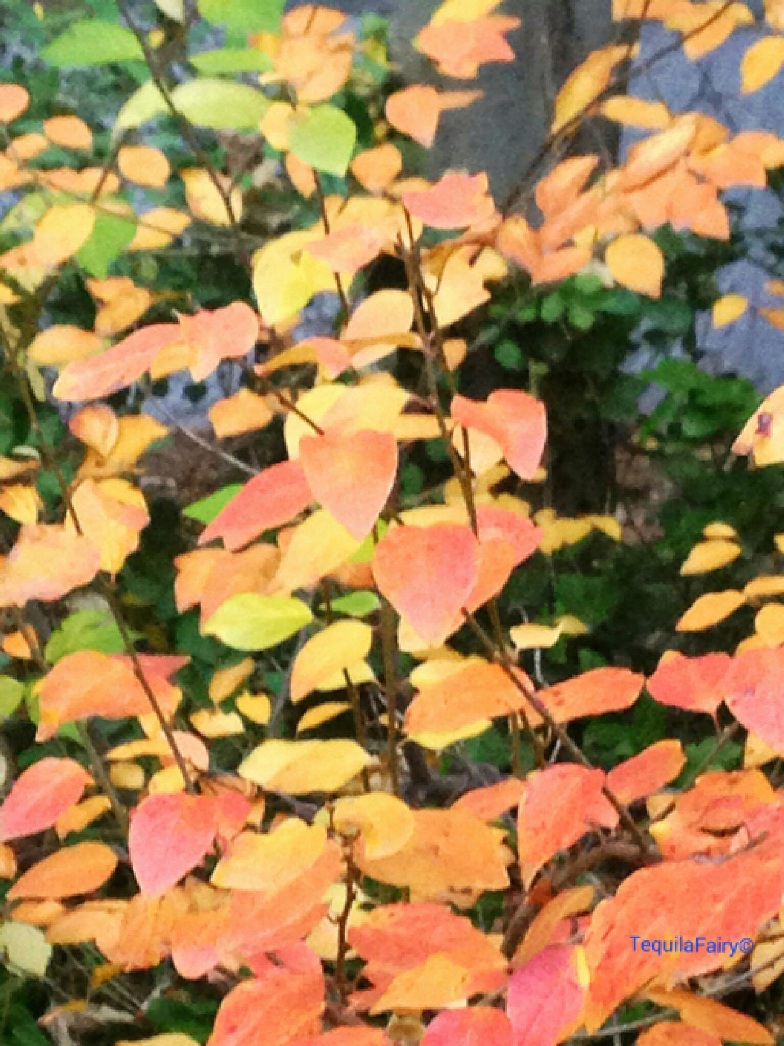 Autumn Leaves by K.Ezell