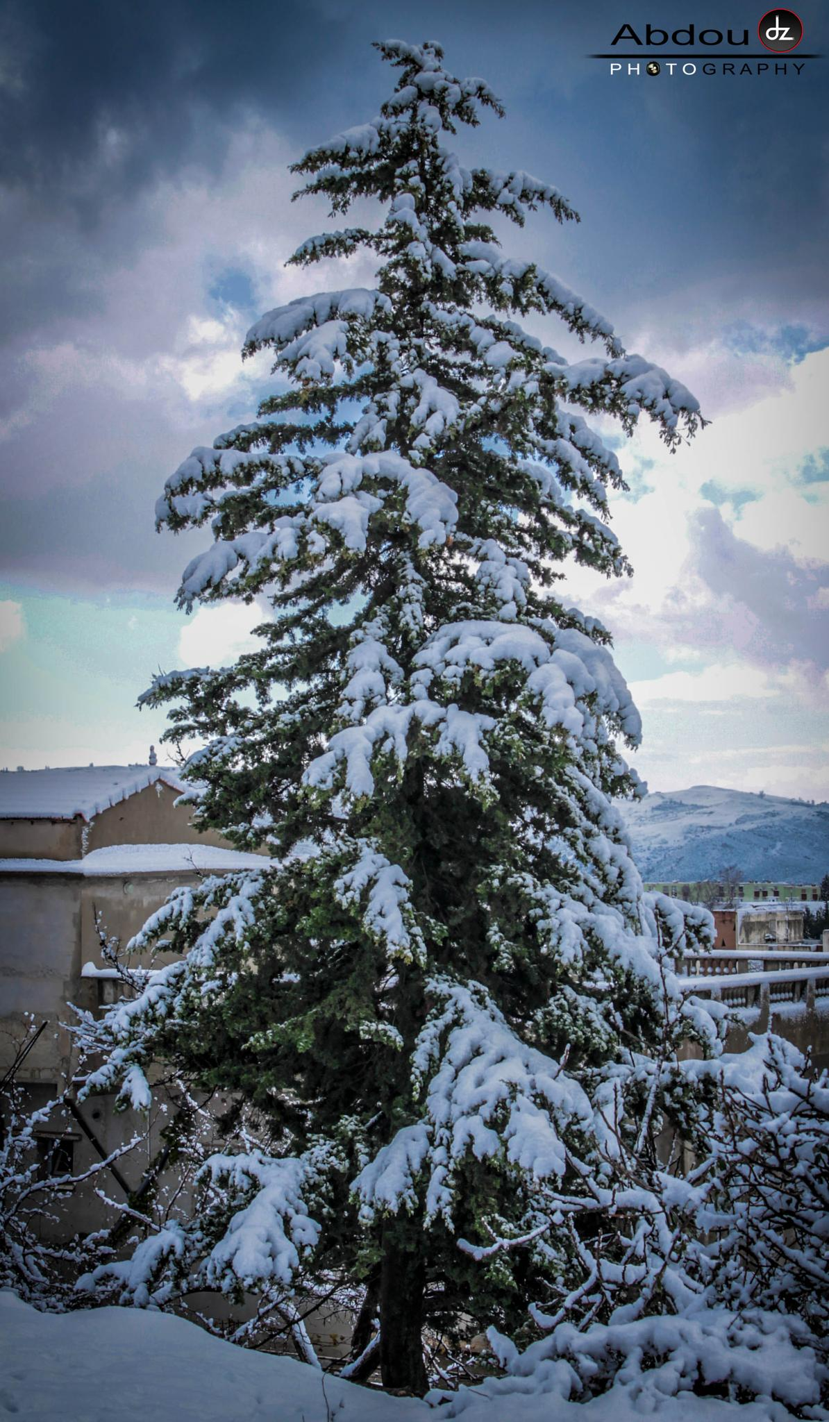 Snow Tree  by Abdoudzphotography