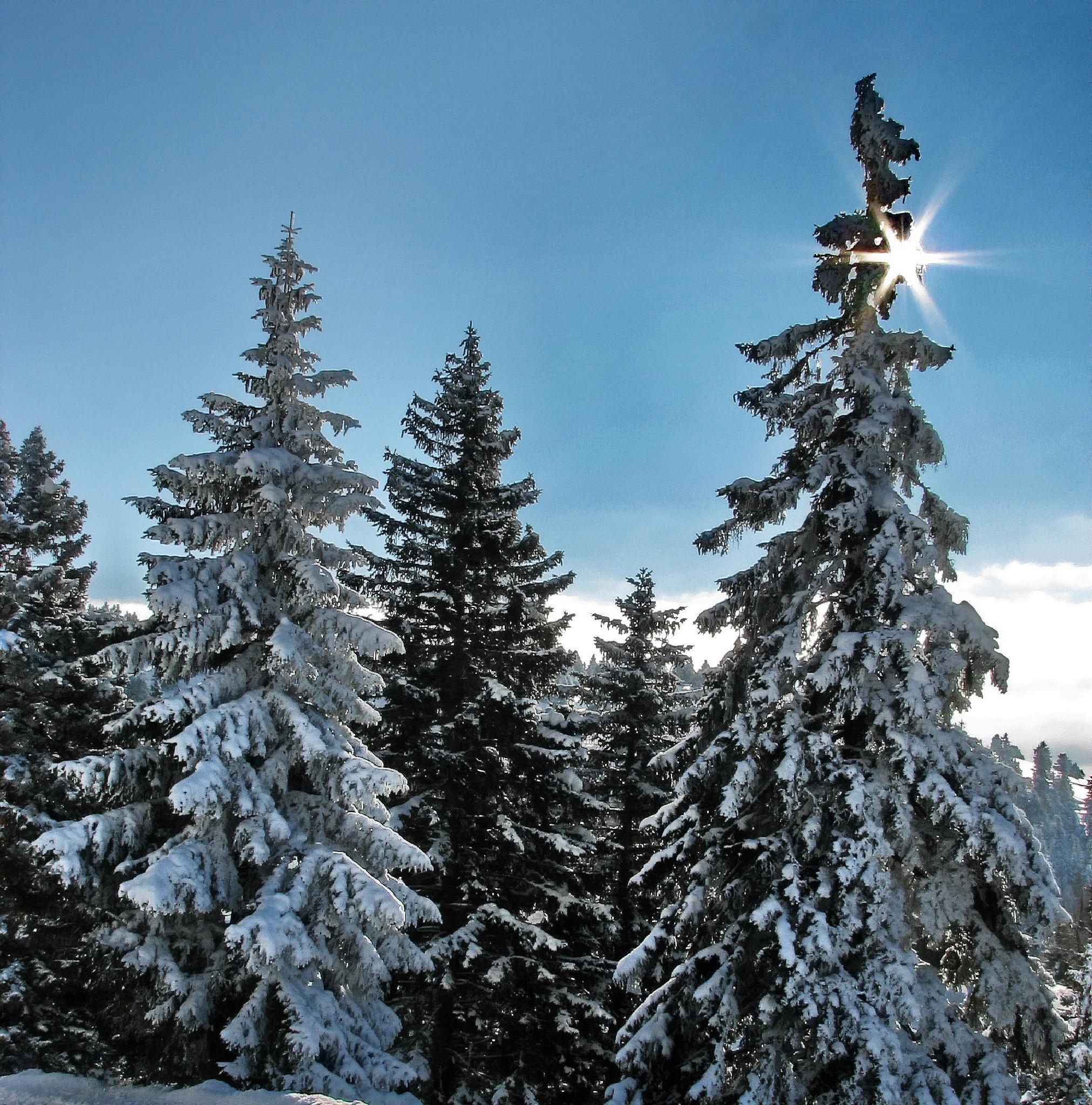 winter mountain forrest  by BernardaBizjak