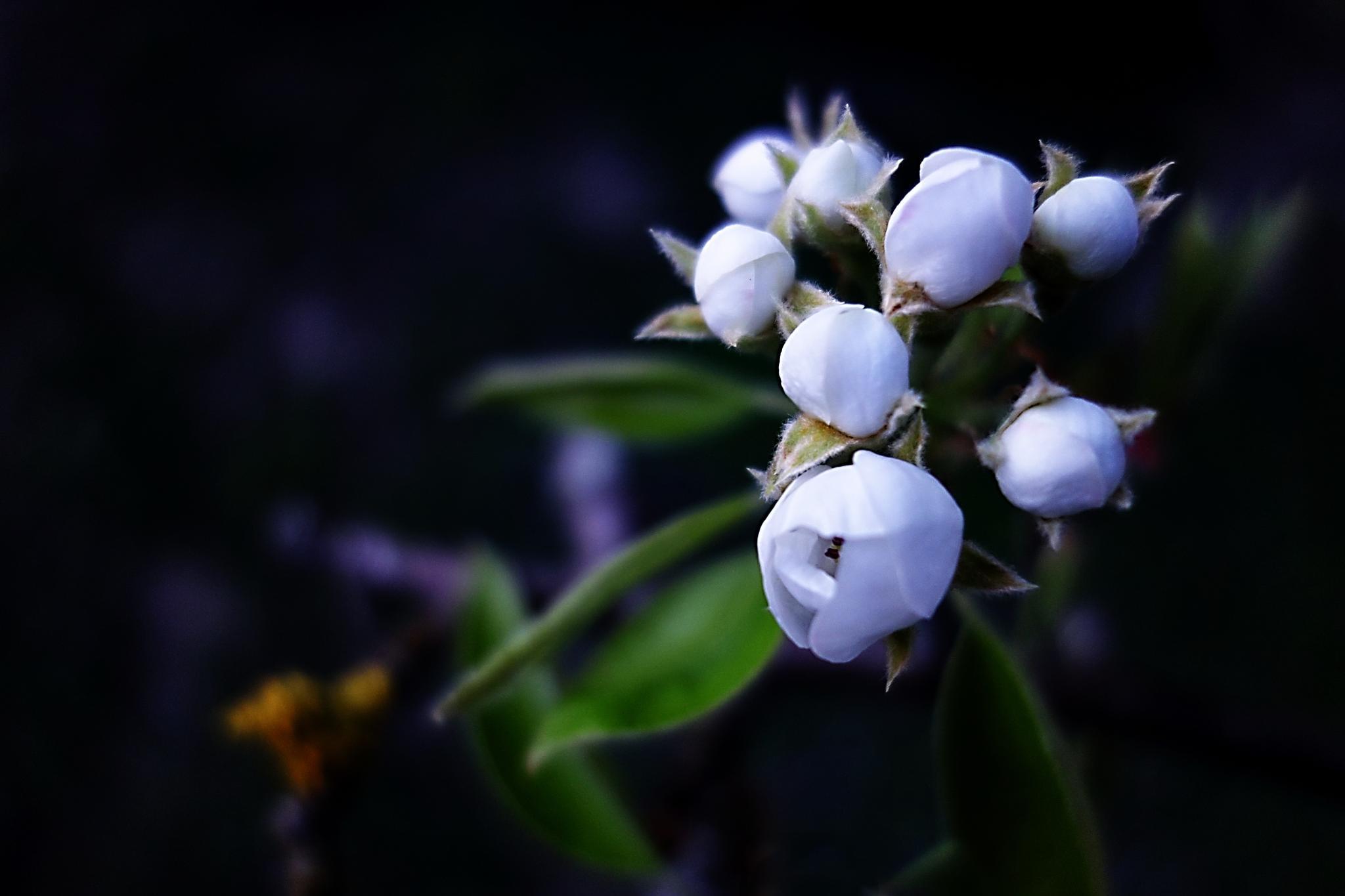 awakening - tree blossom by BernardaBizjak