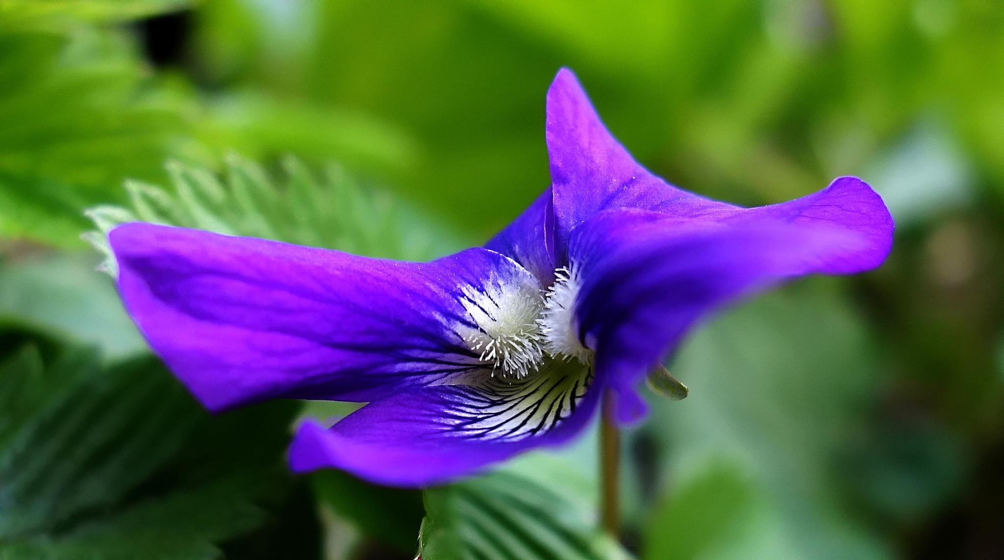violet fashion by BernardaBizjak