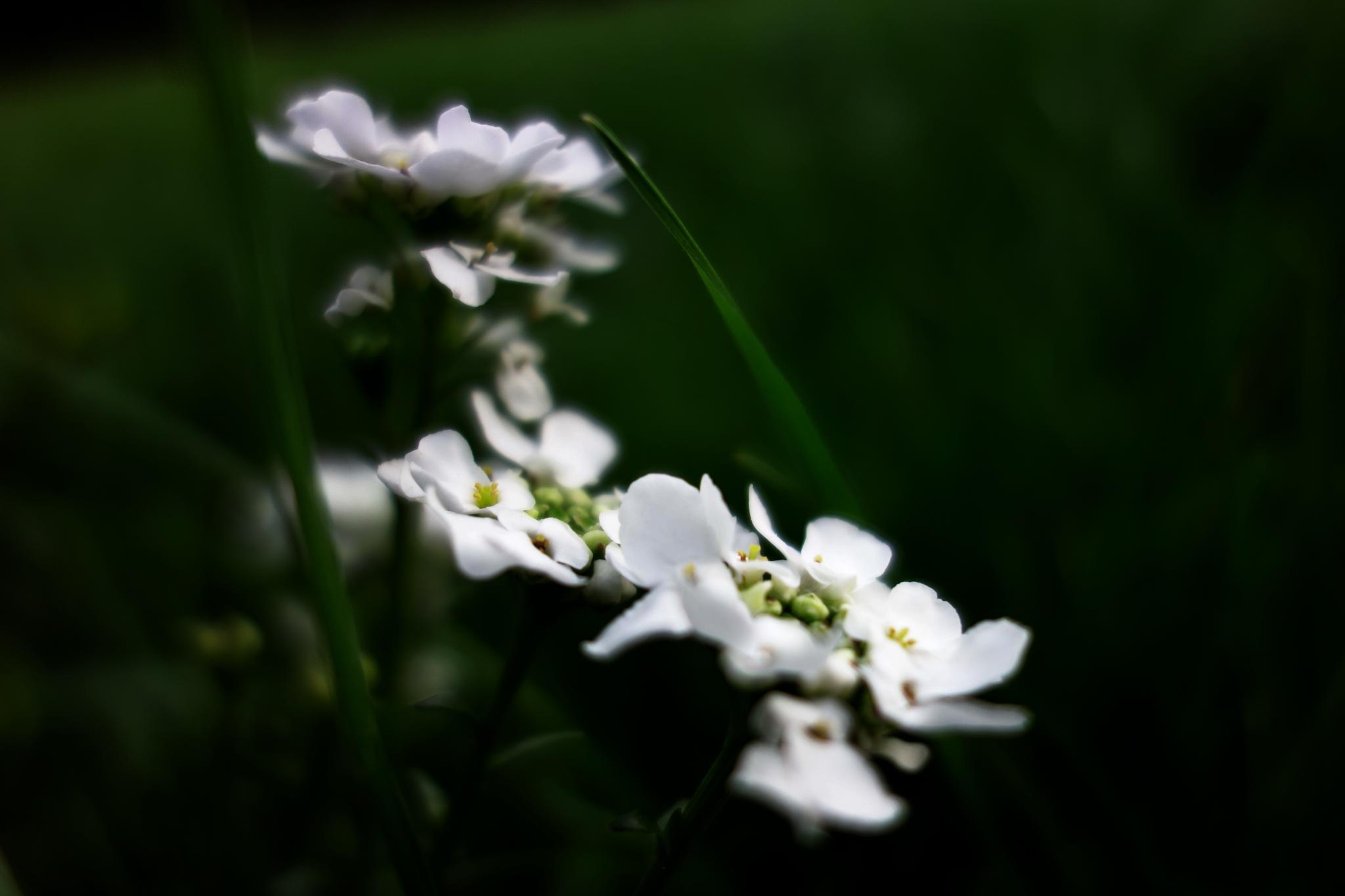 white elegance in dark grass by BernardaBizjak
