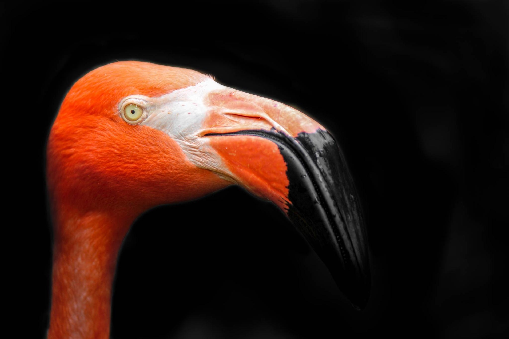 | flamingo dreams | by Sofi Rivera