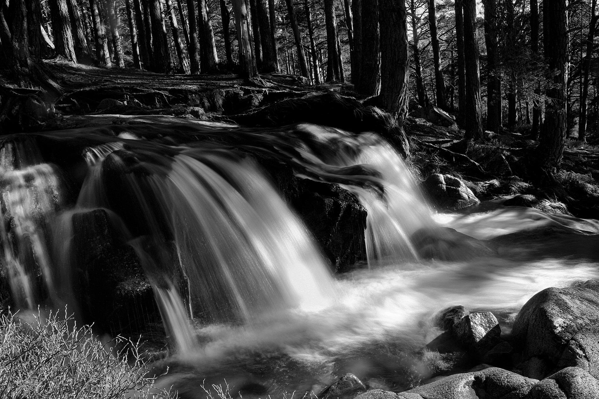 Feshie Falls by sherie.beazley