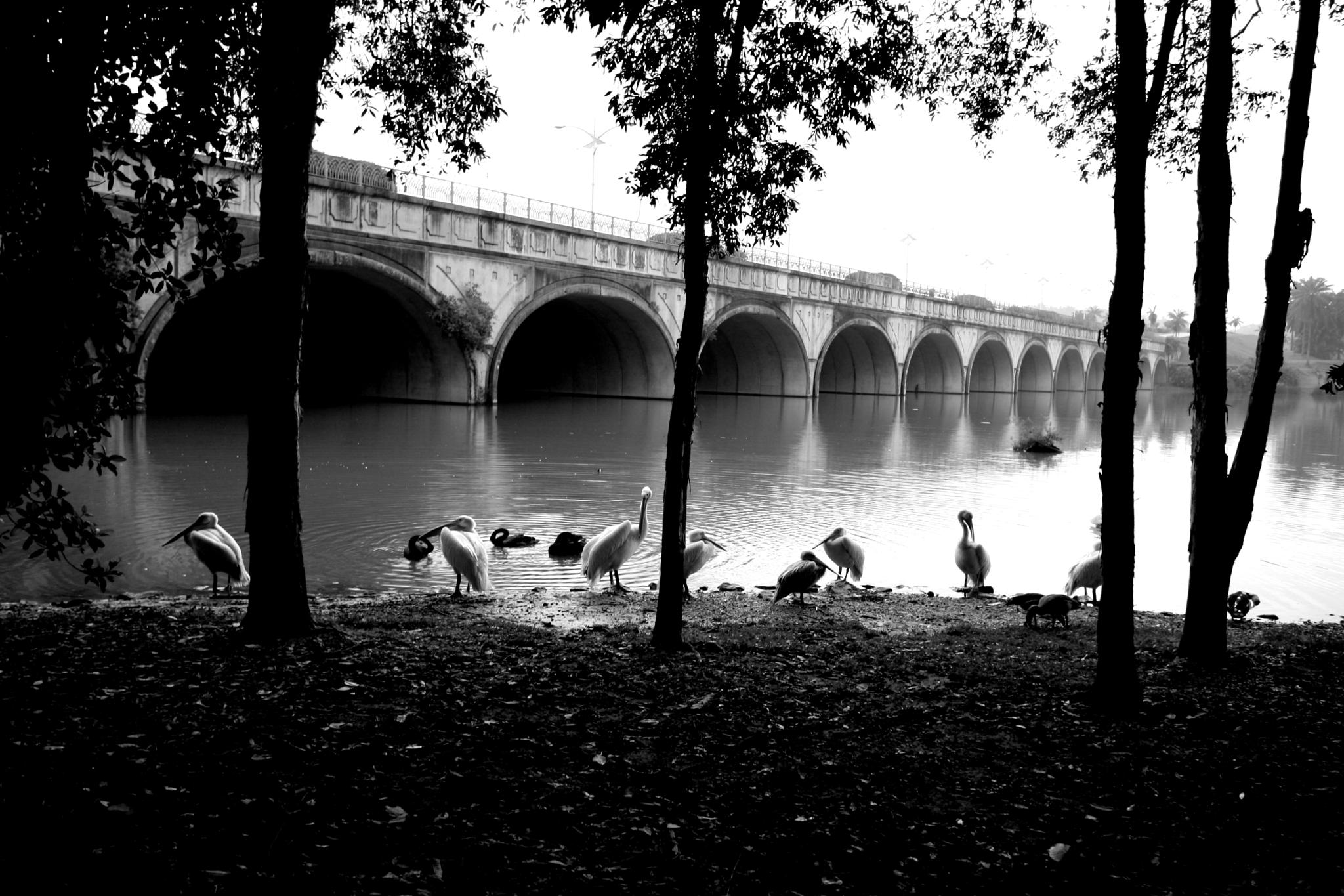 Early birds.. by Adib Noh