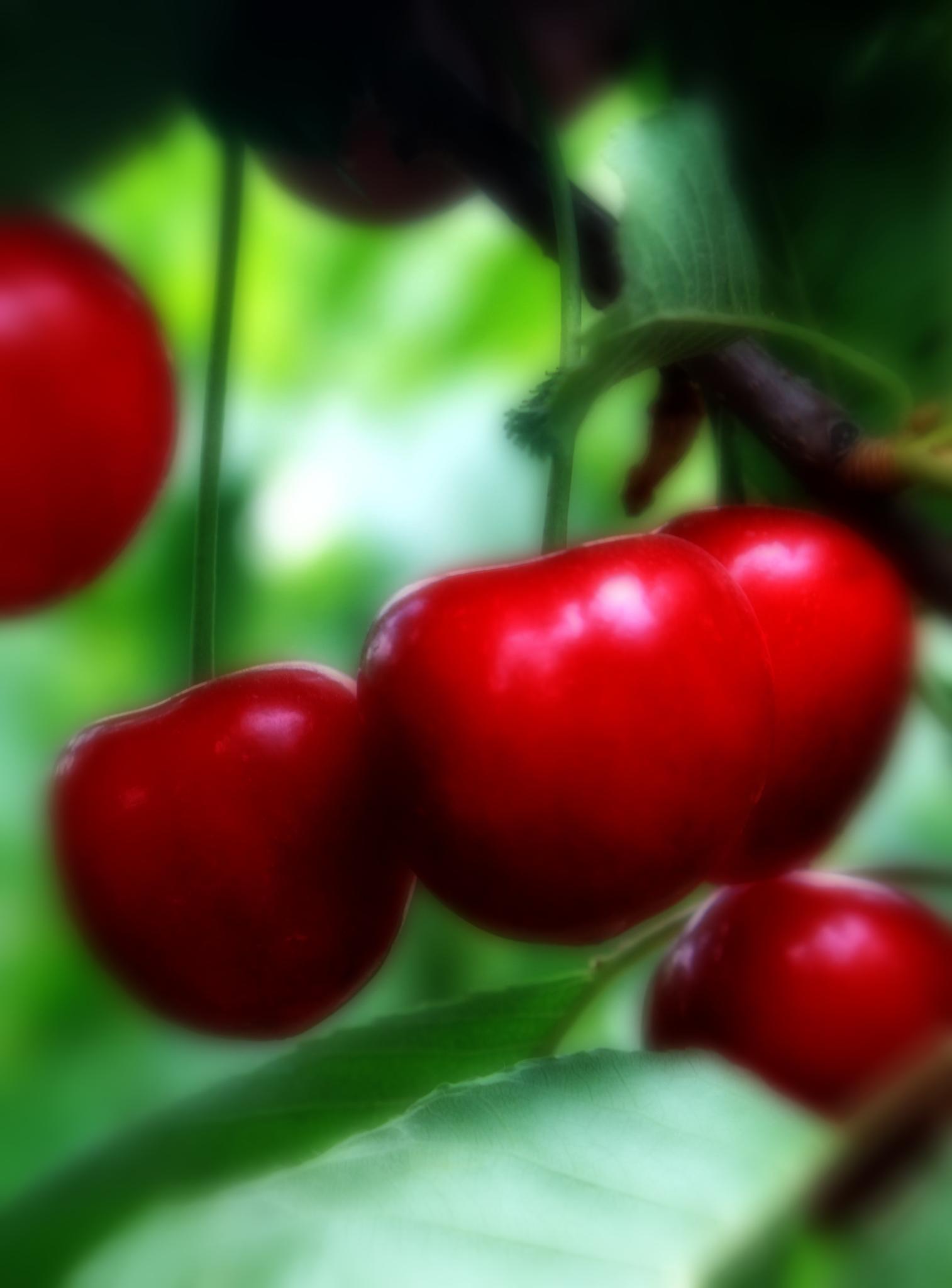 Cherry  by Mahdi Ebrahimi
