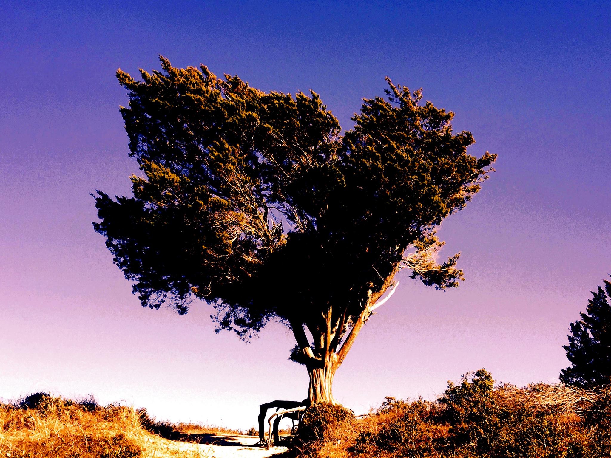 Tree by scausby1