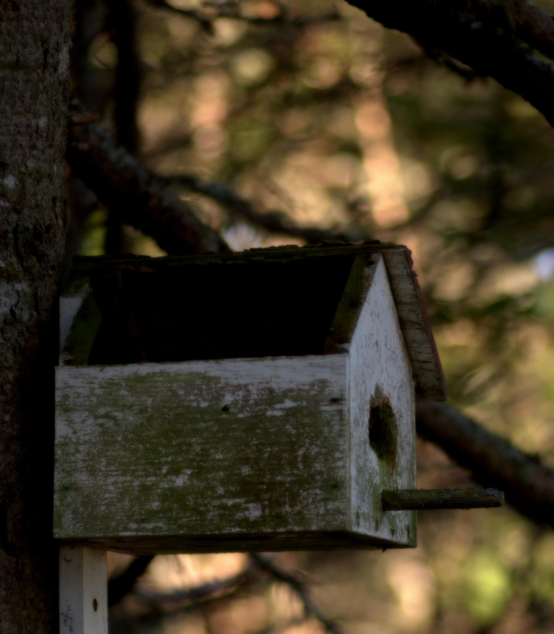 Abandoned Birdhouse by Lee Campbell