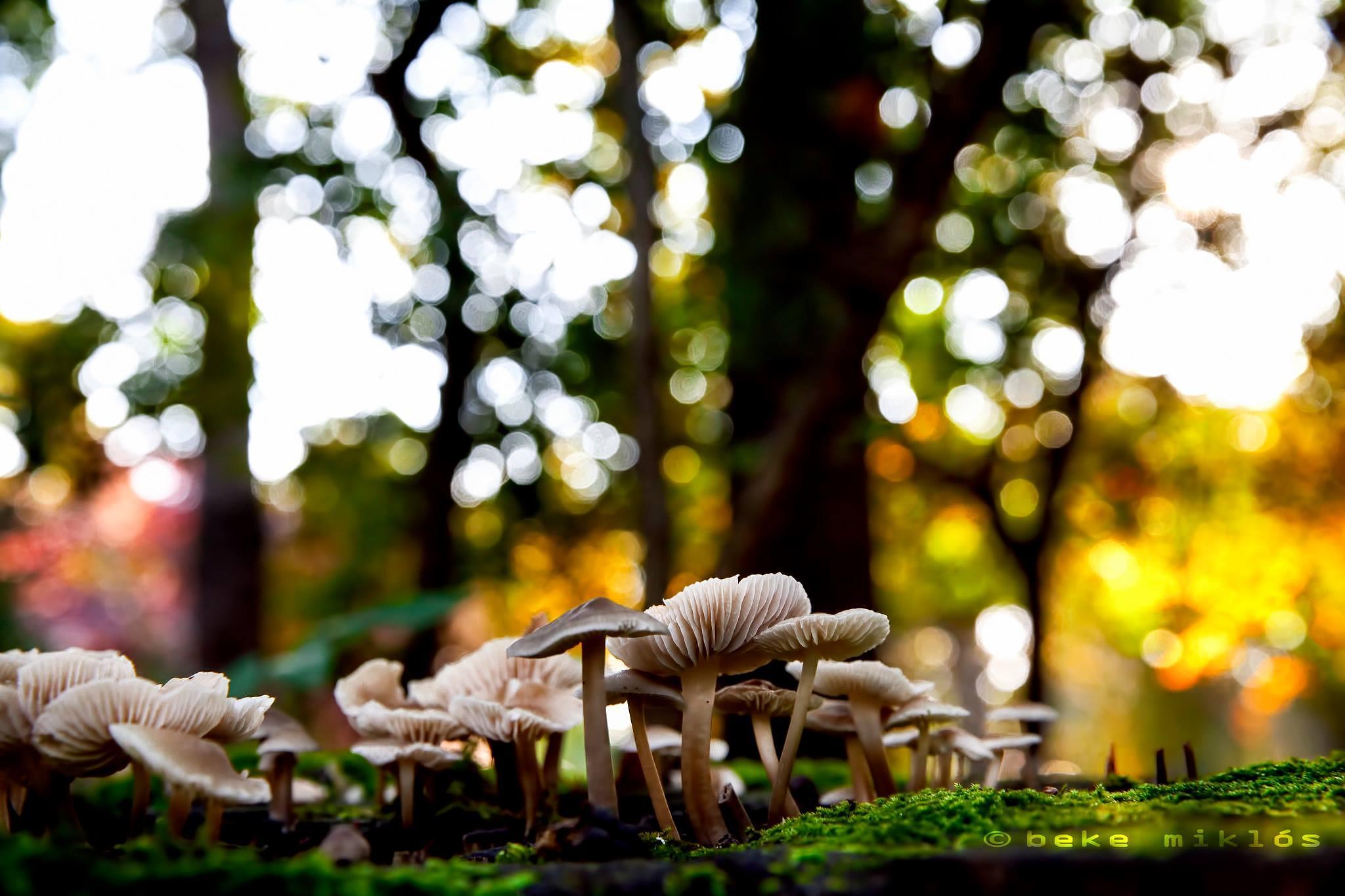 Wonder woods by bekem78