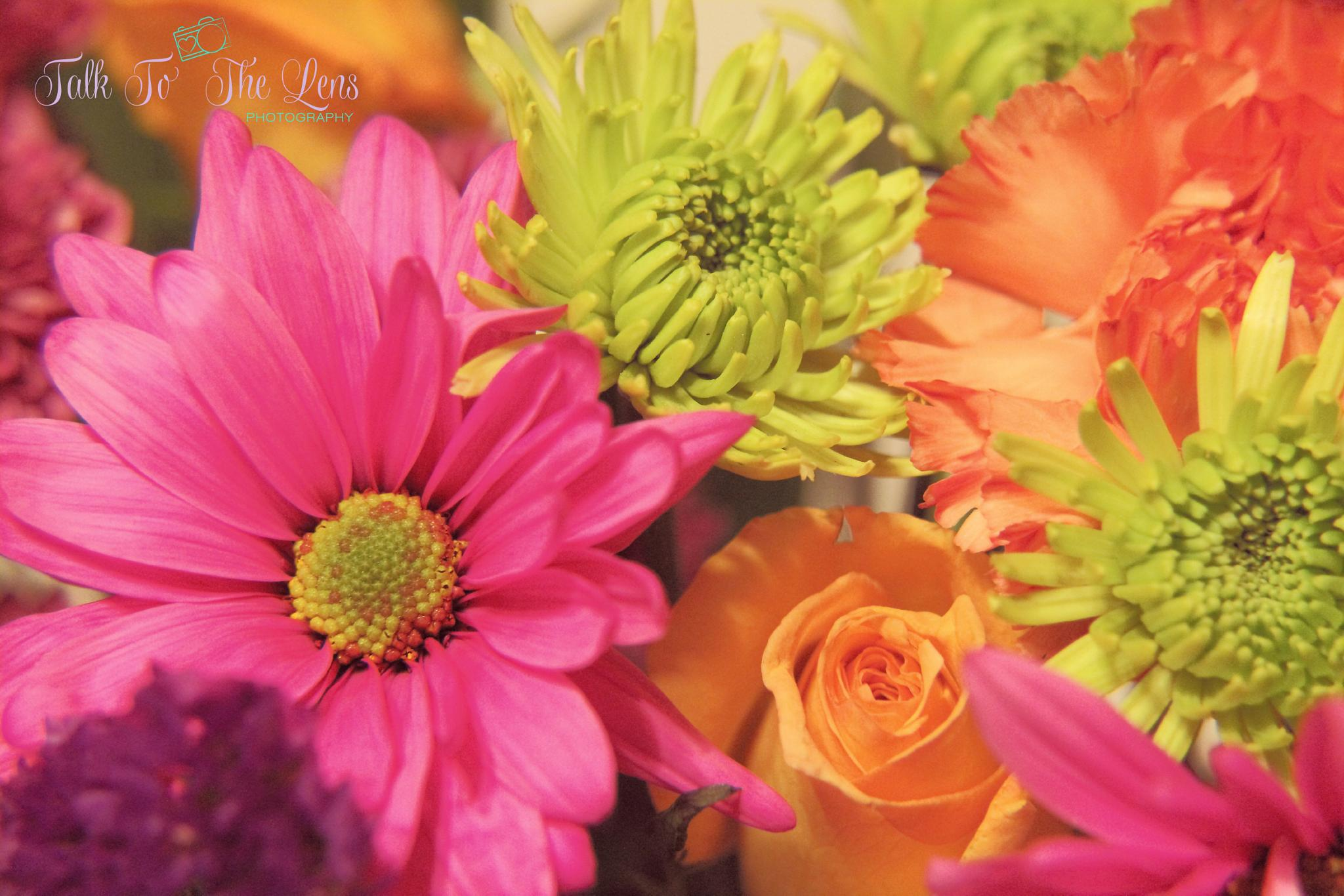 Bright Bloom by michelle.vinnacombe