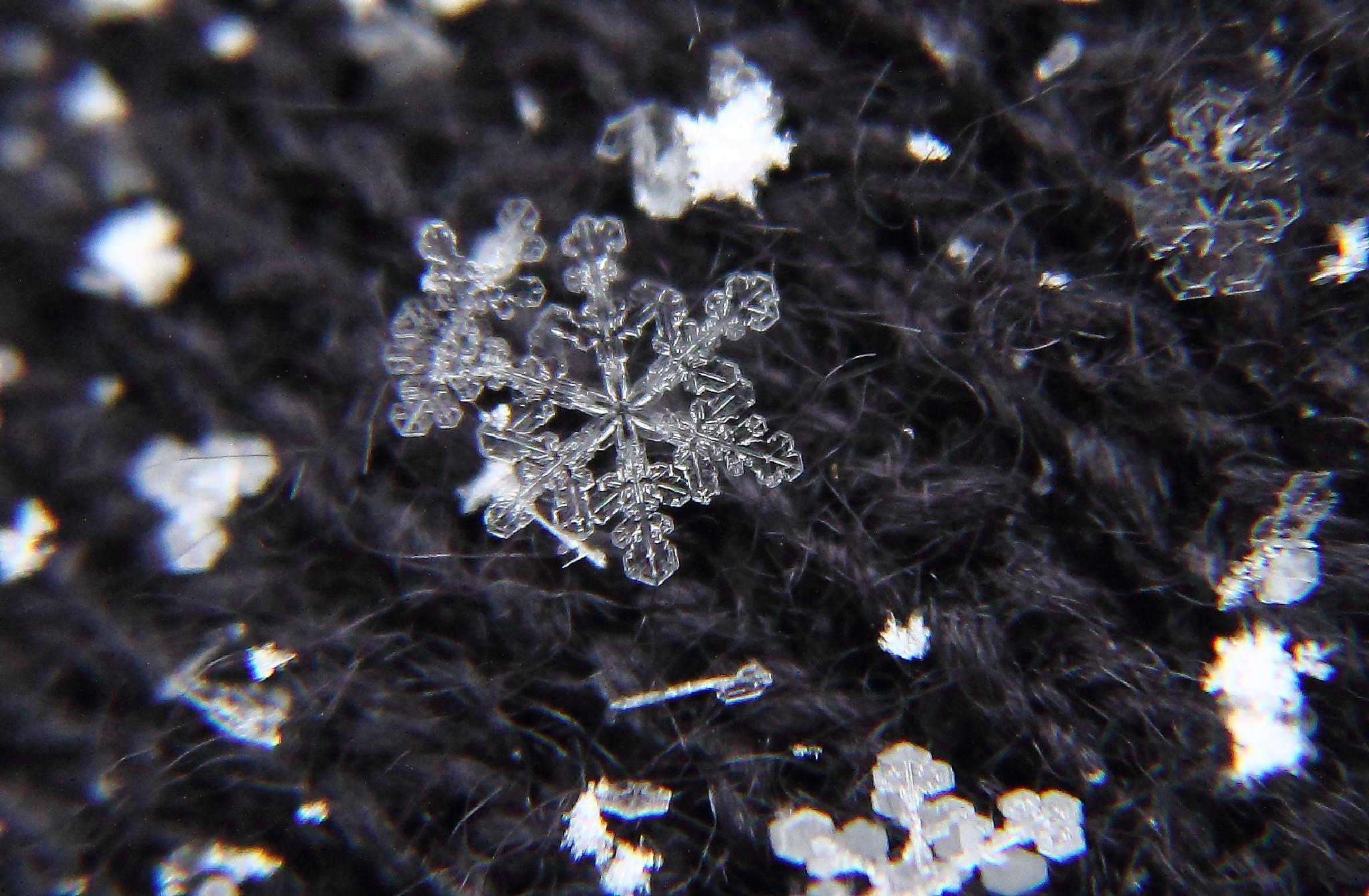 Snowflake 1 by michelle.vinnacombe