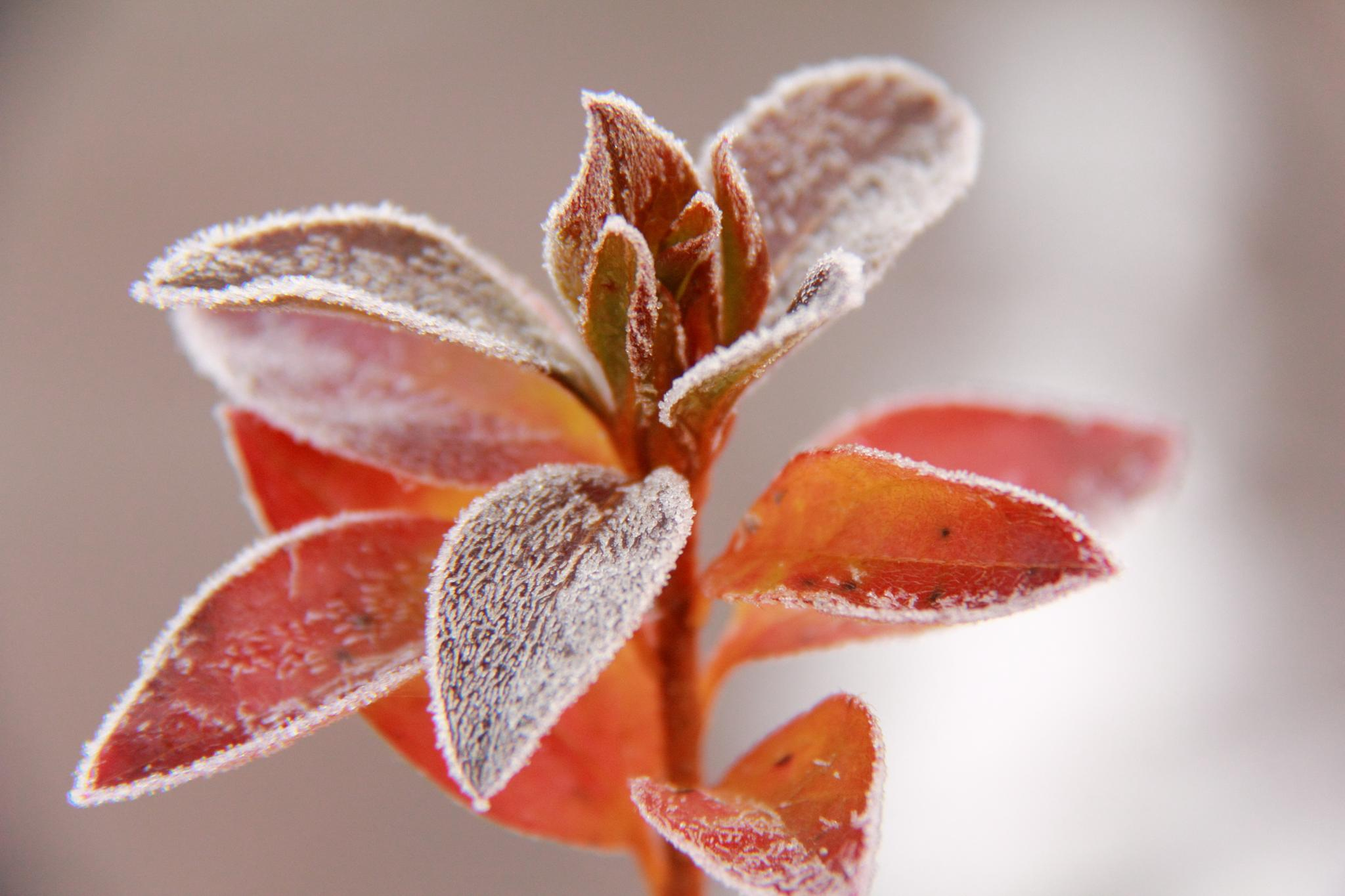 First Frost by michelle.vinnacombe