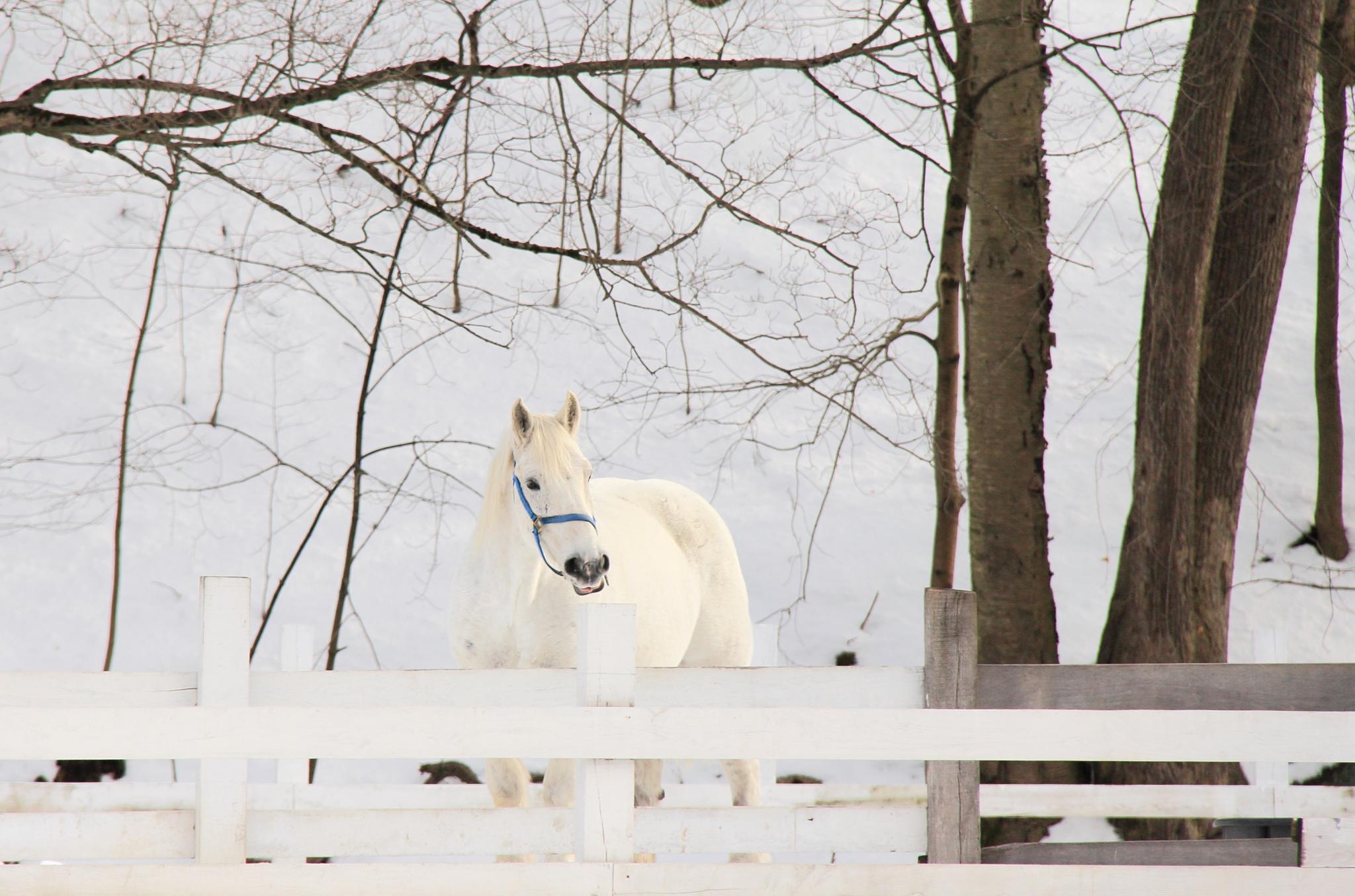 Winter Horse by michelle.vinnacombe
