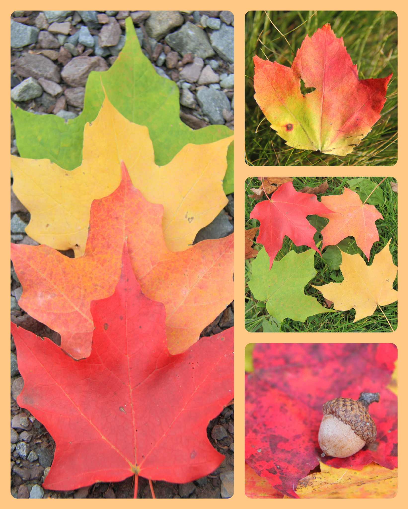 changing leaves by michelle.vinnacombe