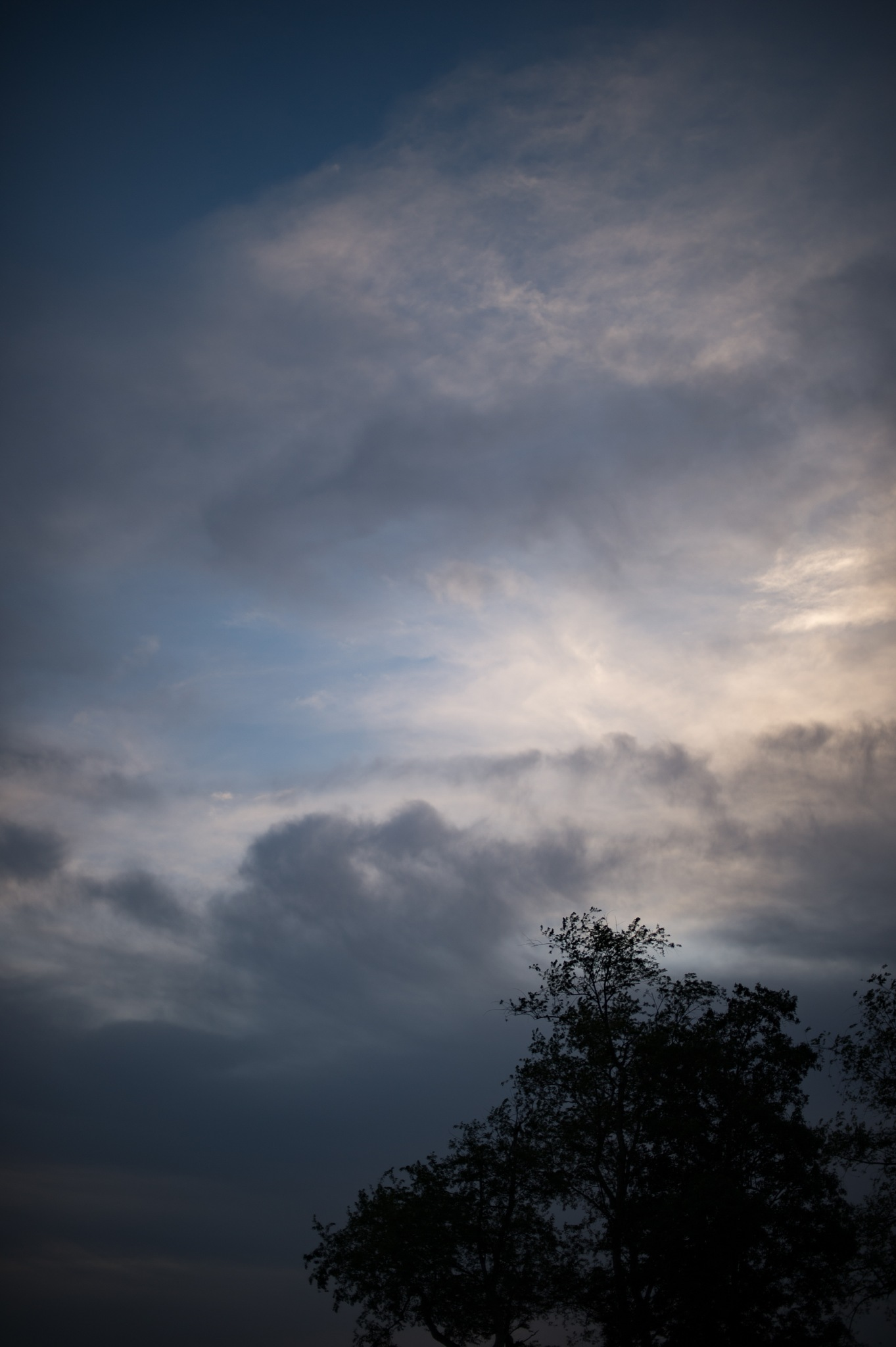 evening sky and trees by mbmiller2