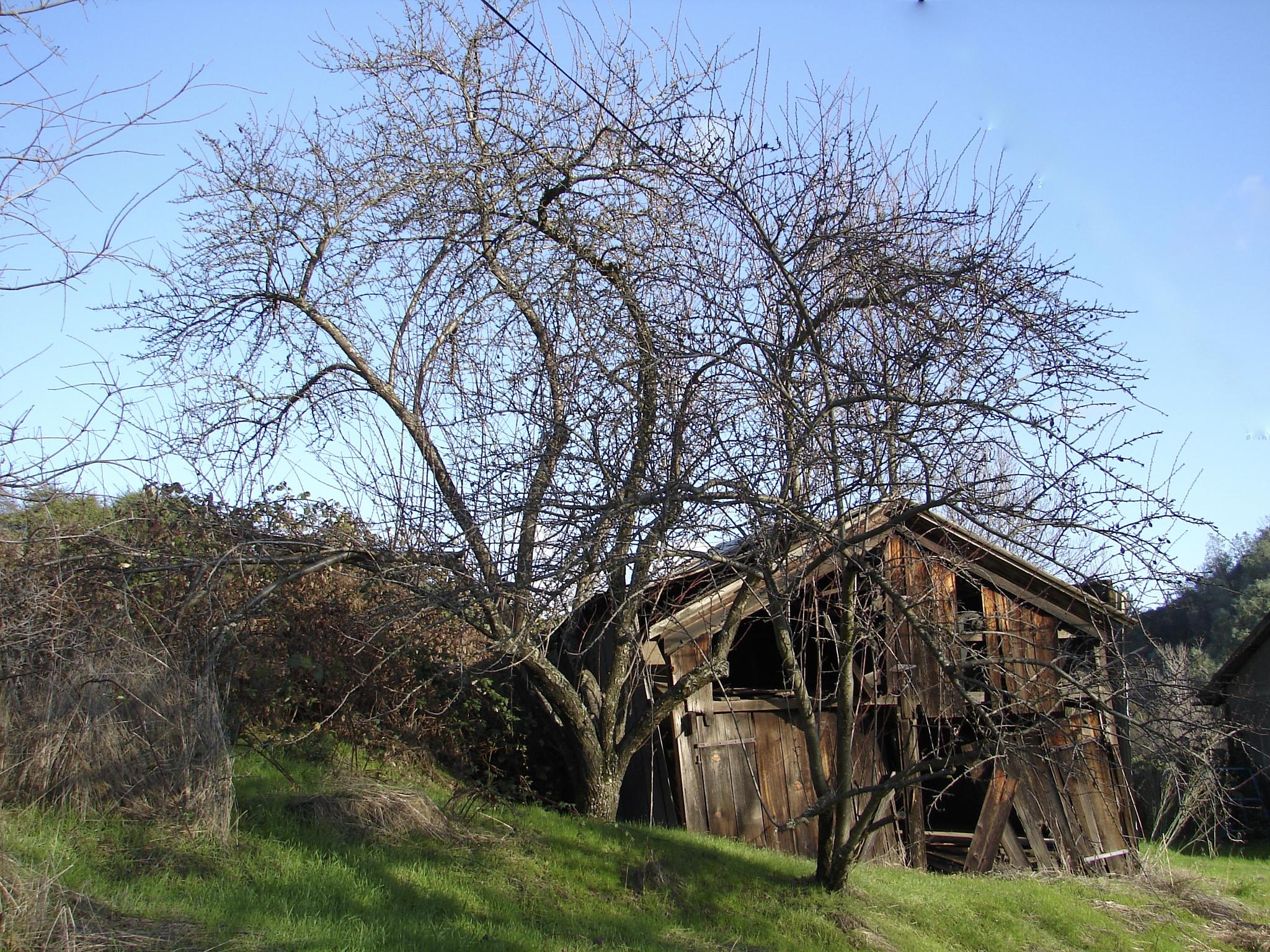 Old Gold Miner's Cabin in Sutter Creek California by MelanieAnnePhillips