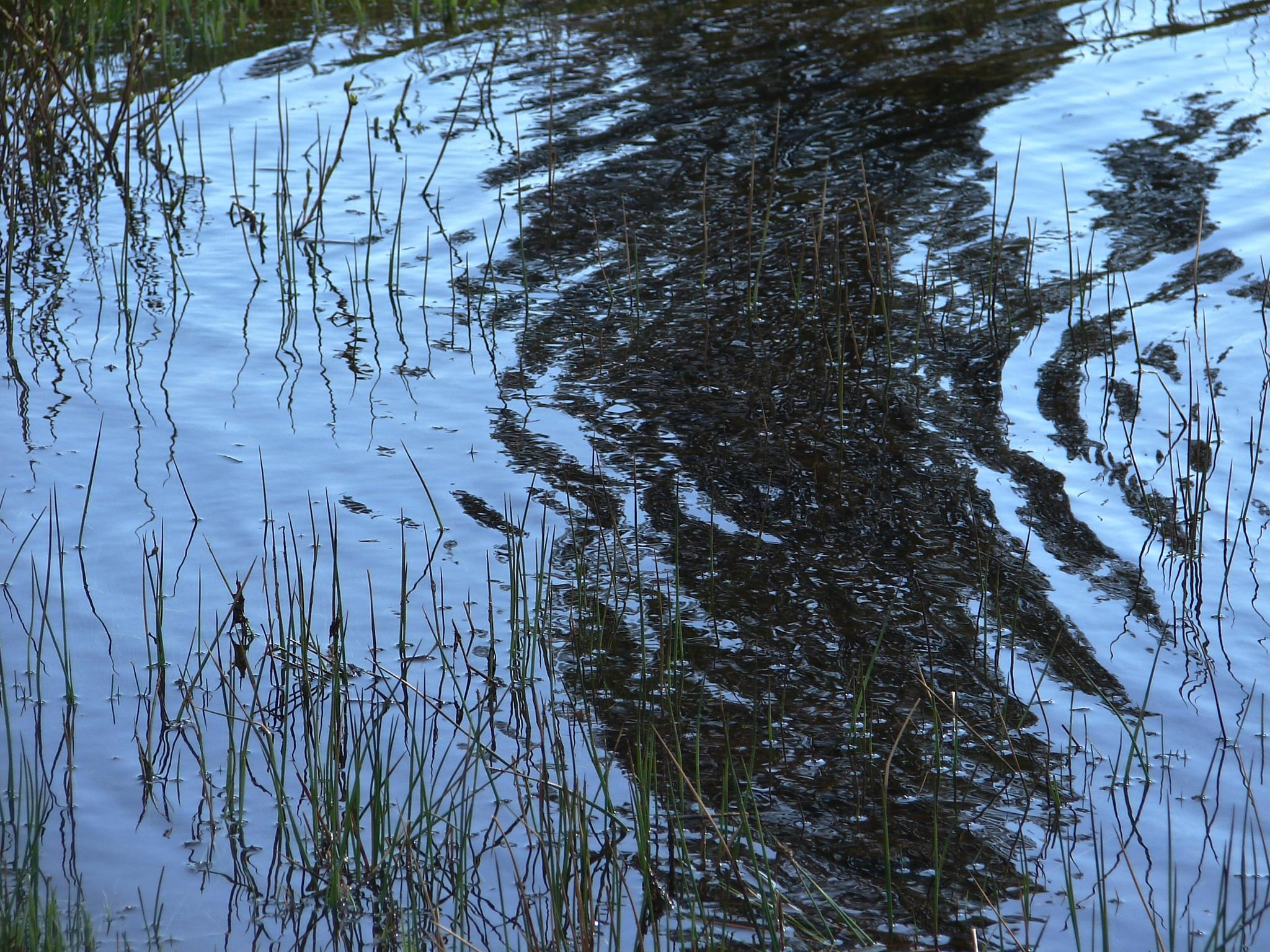 Ripples in the Reeds by MelanieAnnePhillips