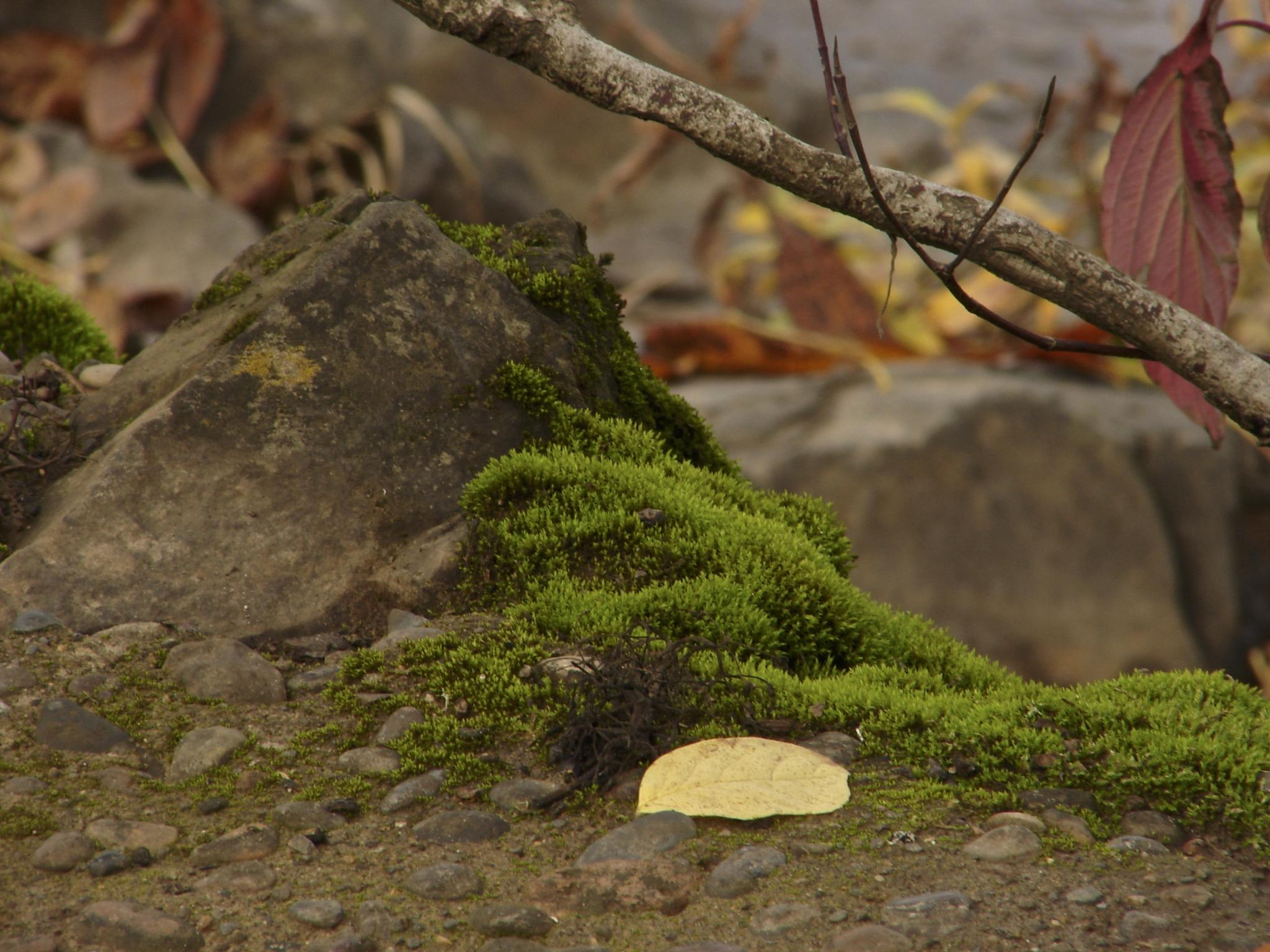 Miniature Shire by MelanieAnnePhillips