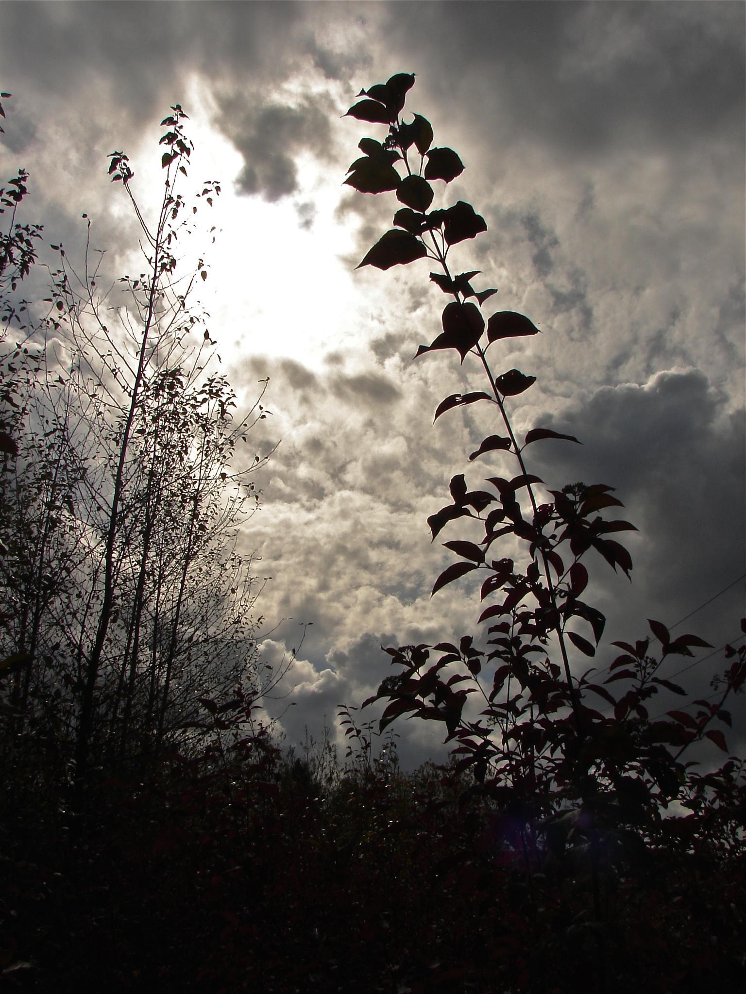 Sunburst 1 by MelanieAnnePhillips