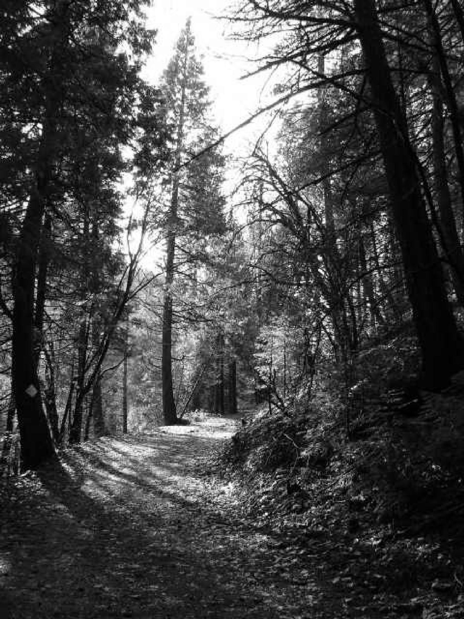 Forest Path by MelanieAnnePhillips