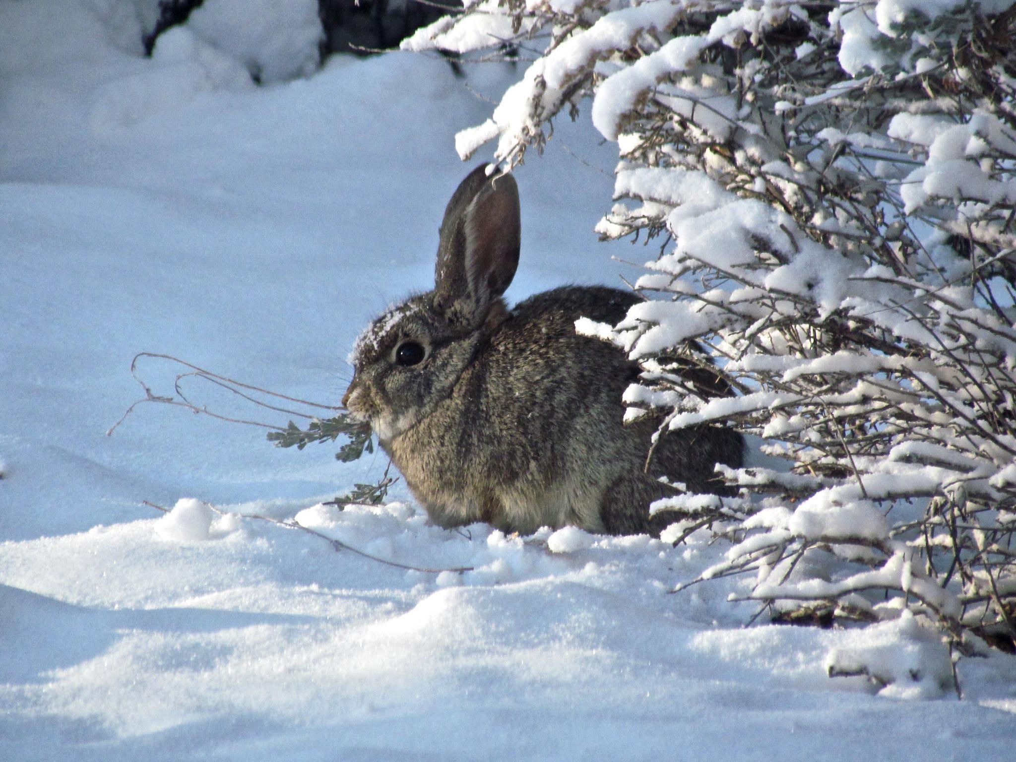 Bunny Munching by MelanieAnnePhillips