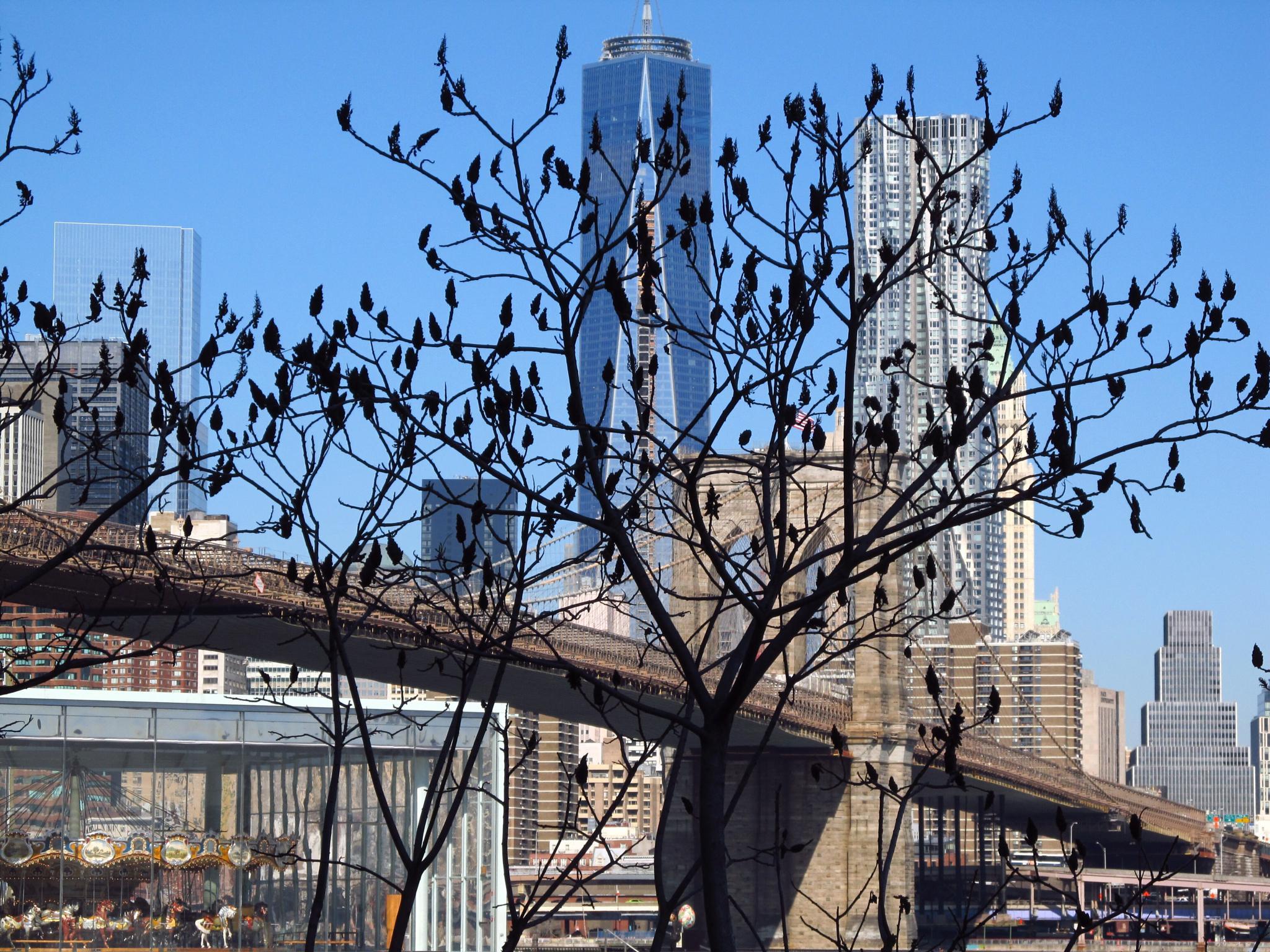 NYC Brooklin Bridge by Harry Schäfer