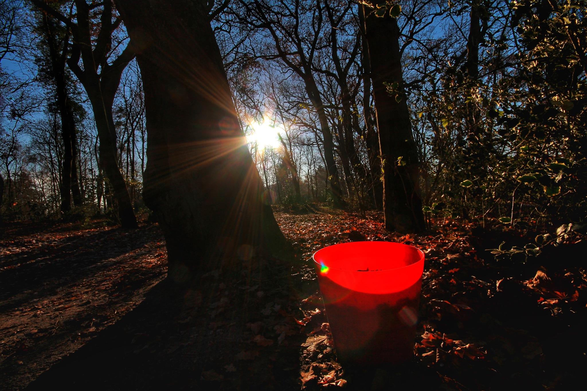 Der rote Eimer im Wald by Harry Schäfer