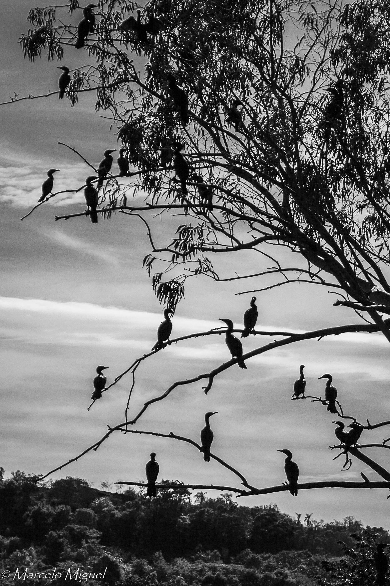 Birds at Ipanema Farm by marcelomiguel1967