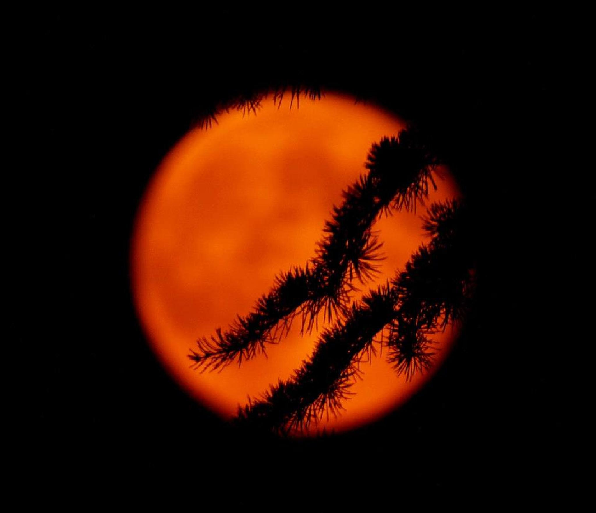 Red moon by Kenéz Imre