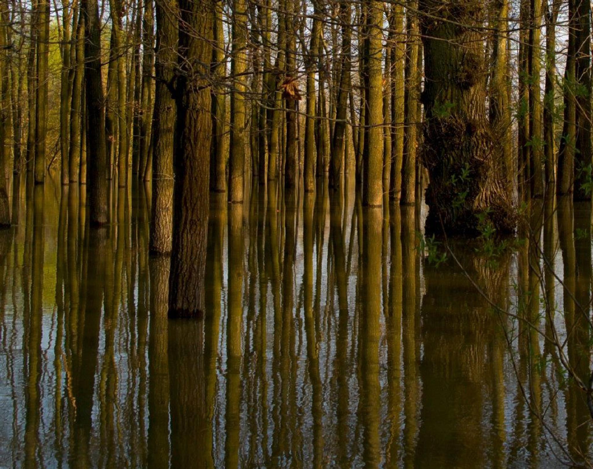Flood by Kenéz Imre