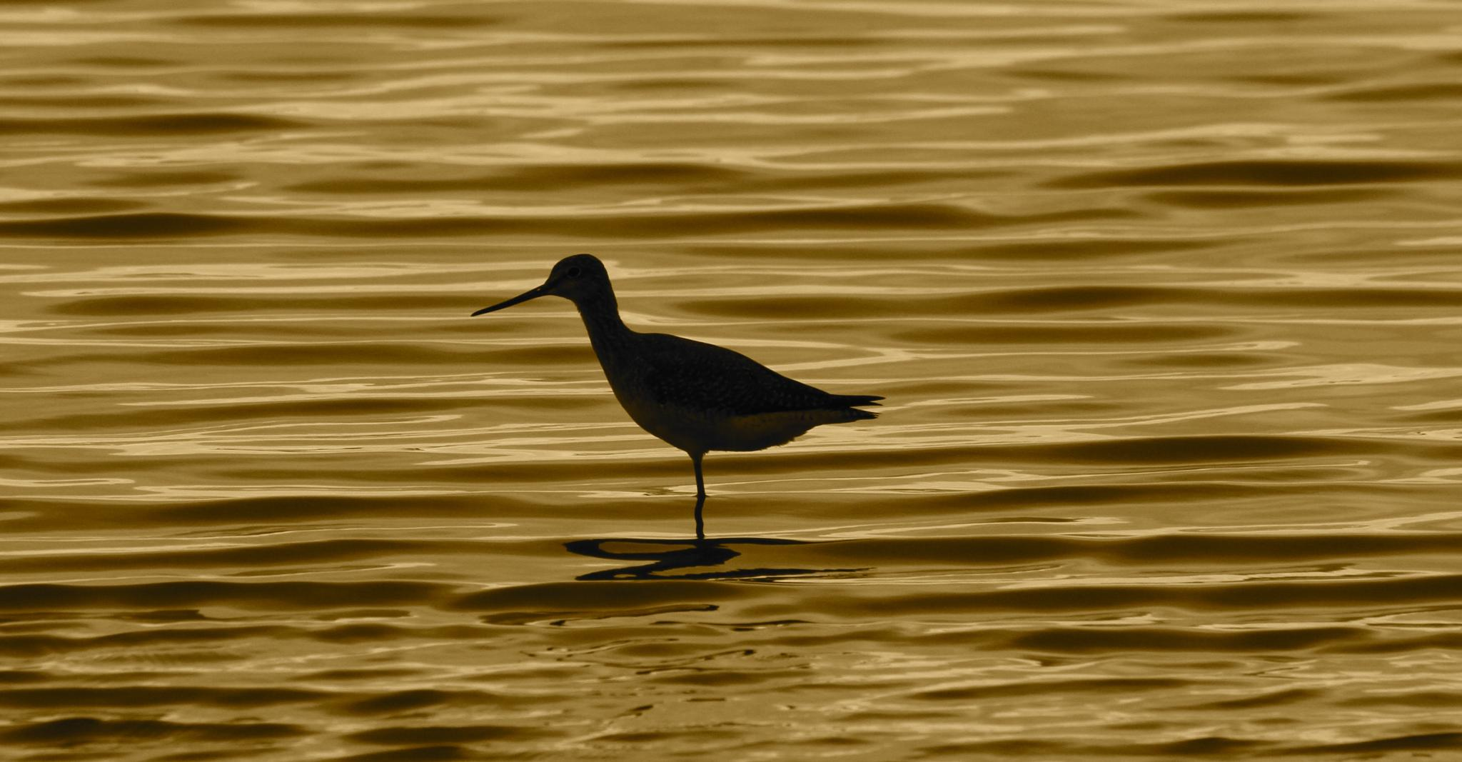 Bird on the water by andy.brook.18