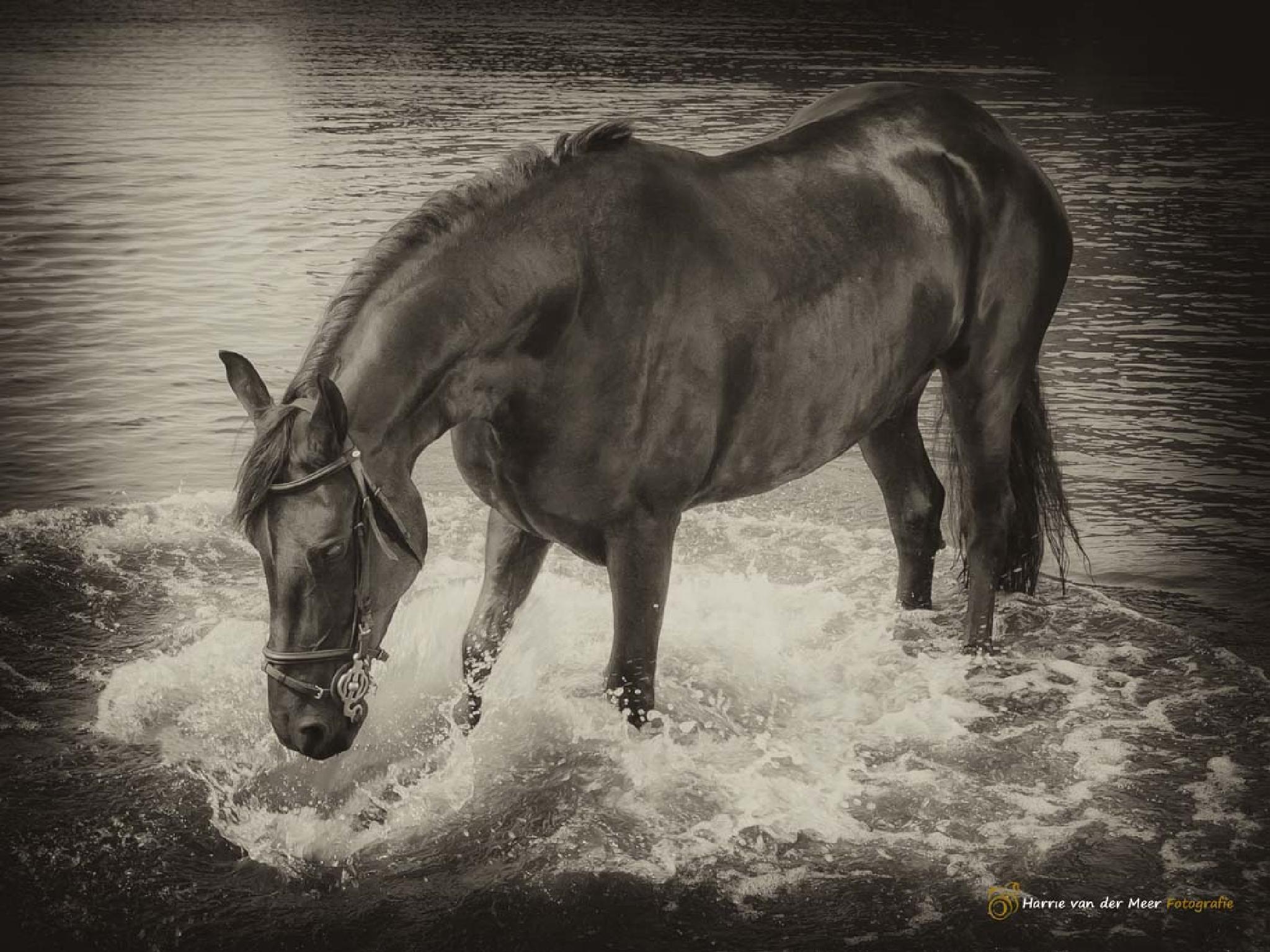 Waterfun by Harrie van der Meer Fotografie
