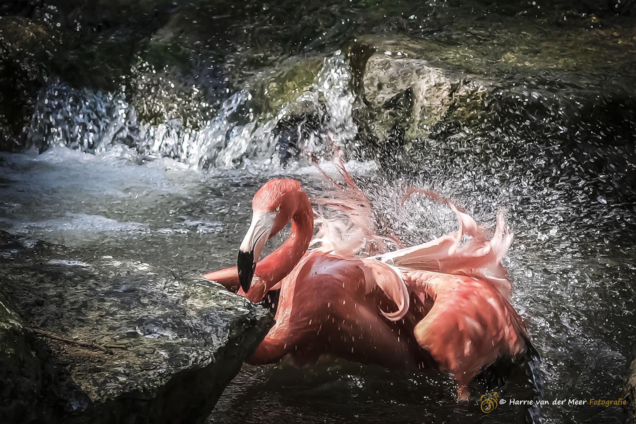 Splashing by Harrie van der Meer Fotografie