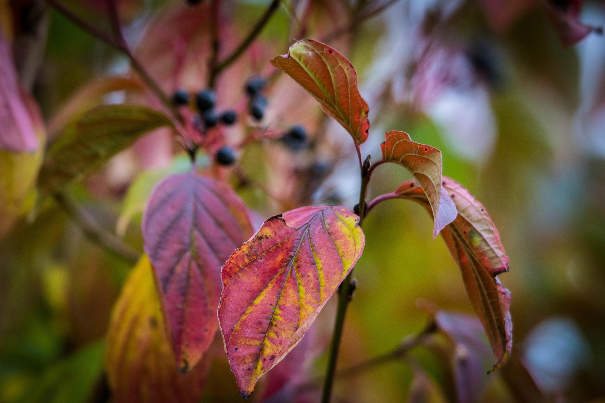 "Autumn,""Red."" by Steven Mark Bridgett."
