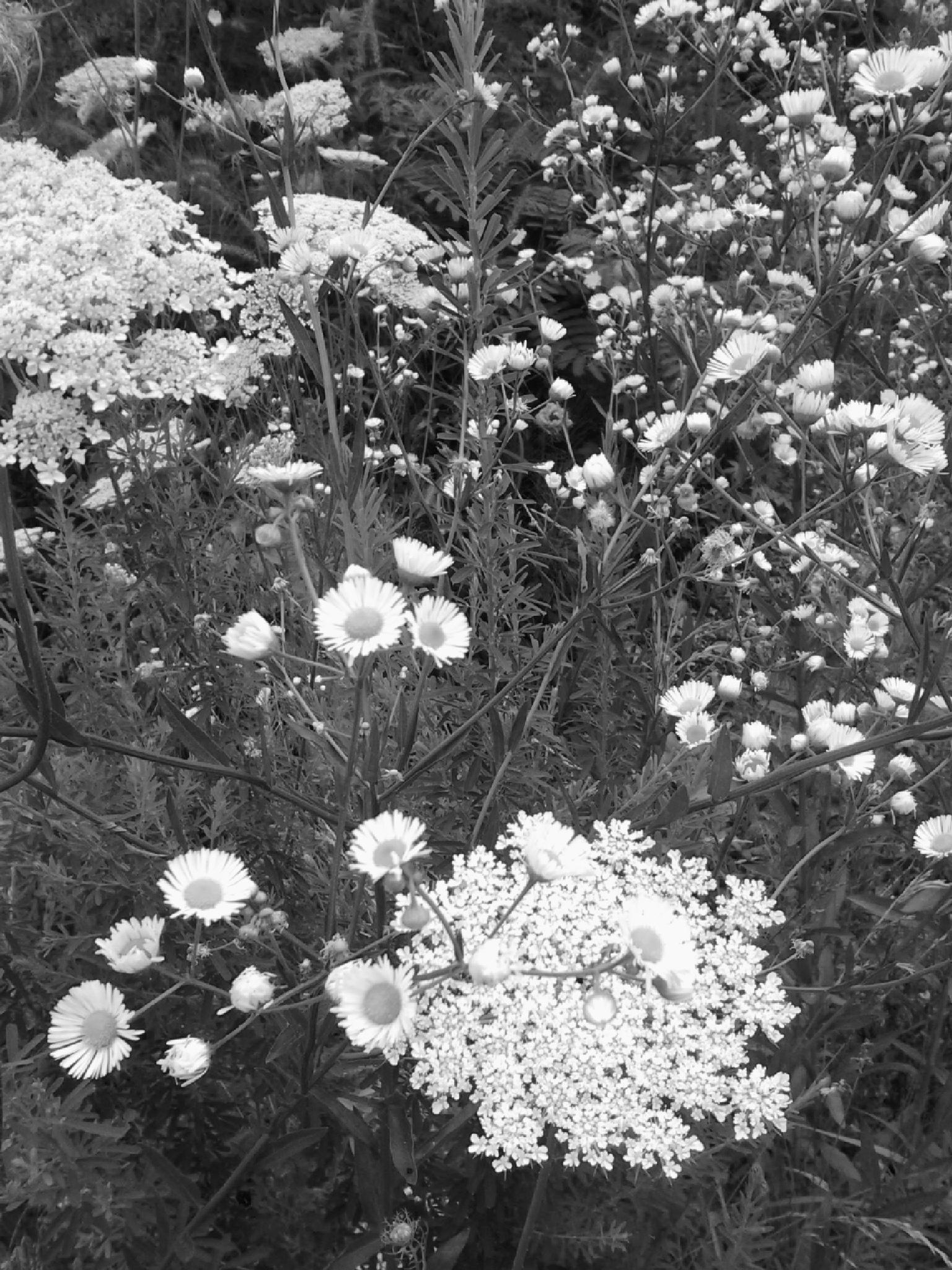 Roadside Weeds #2 by Lucy Jones Photography