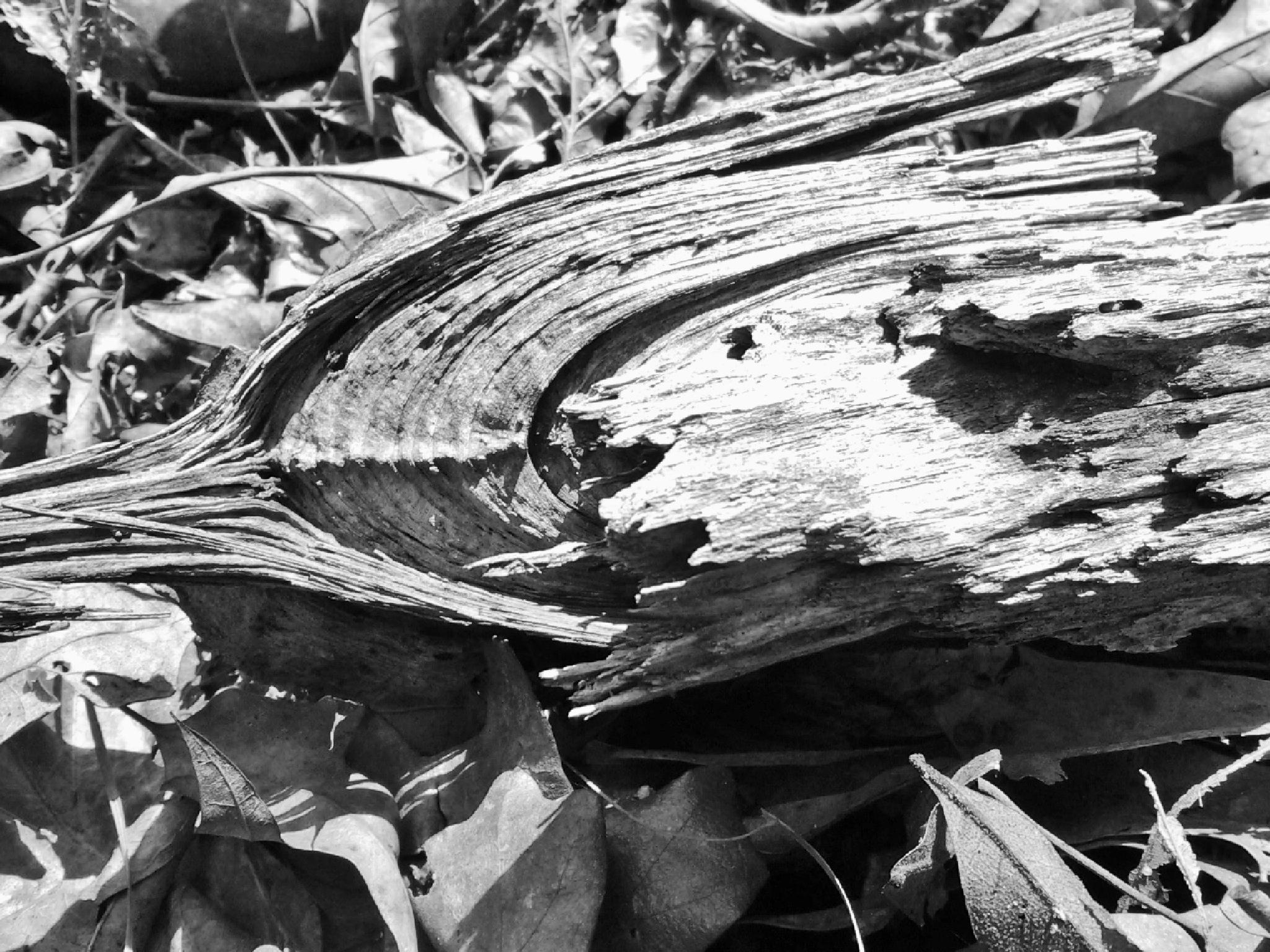 Rotting Wood by Lucy Jones Photography
