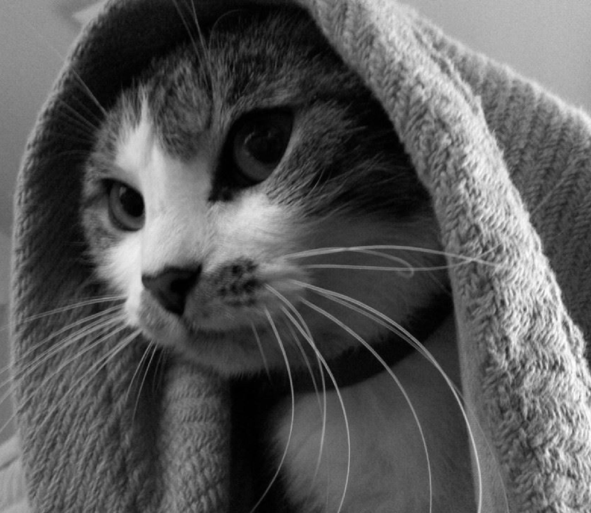 Merry Merri Under The Blanket by Lucy Jones Photography