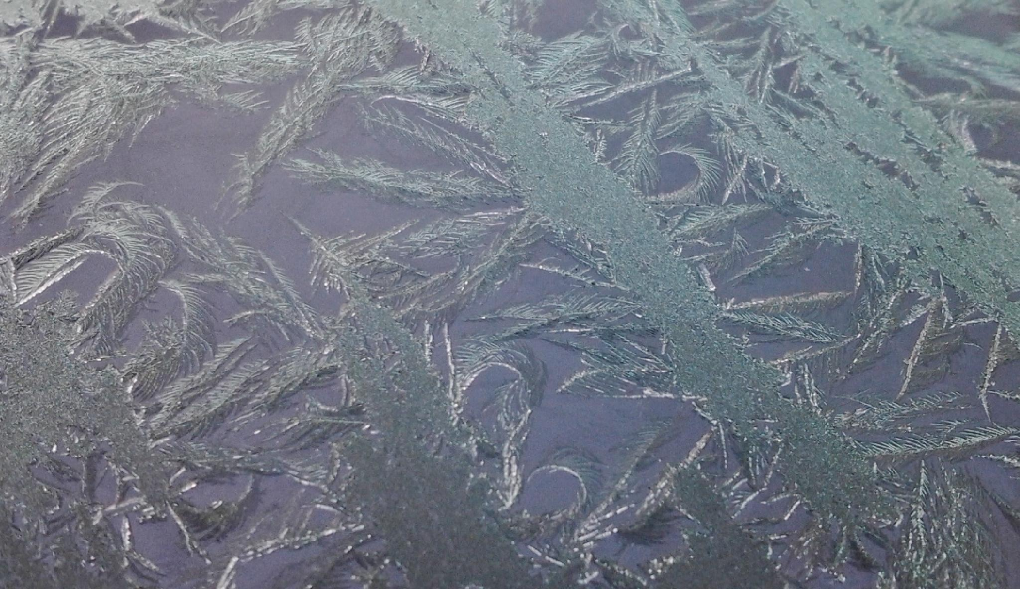 Frost Forming by Lucy Jones Photography