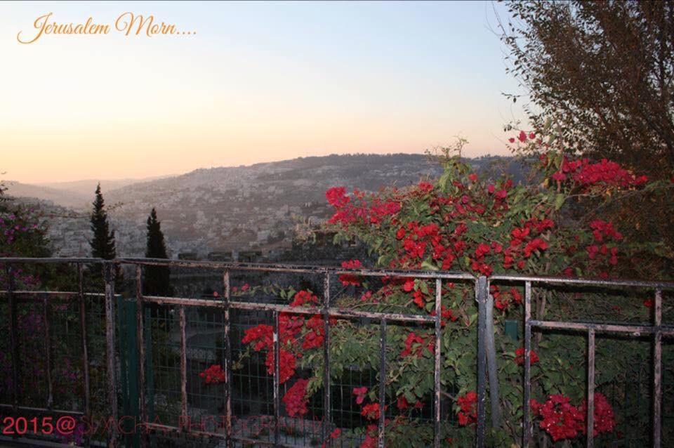 Jerusalem Morn by simcha.kimsey