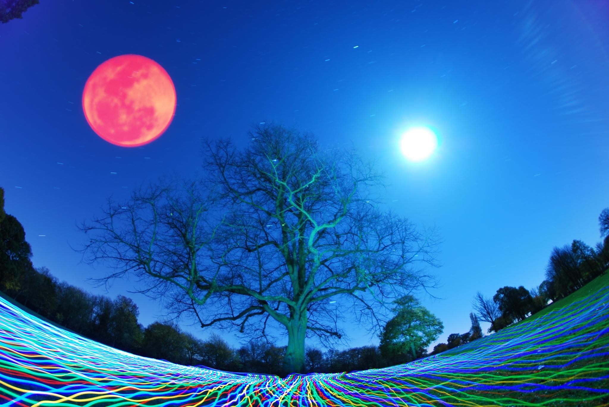Rose Moon in Weelsby wood by JamesdeLunaLightpainting